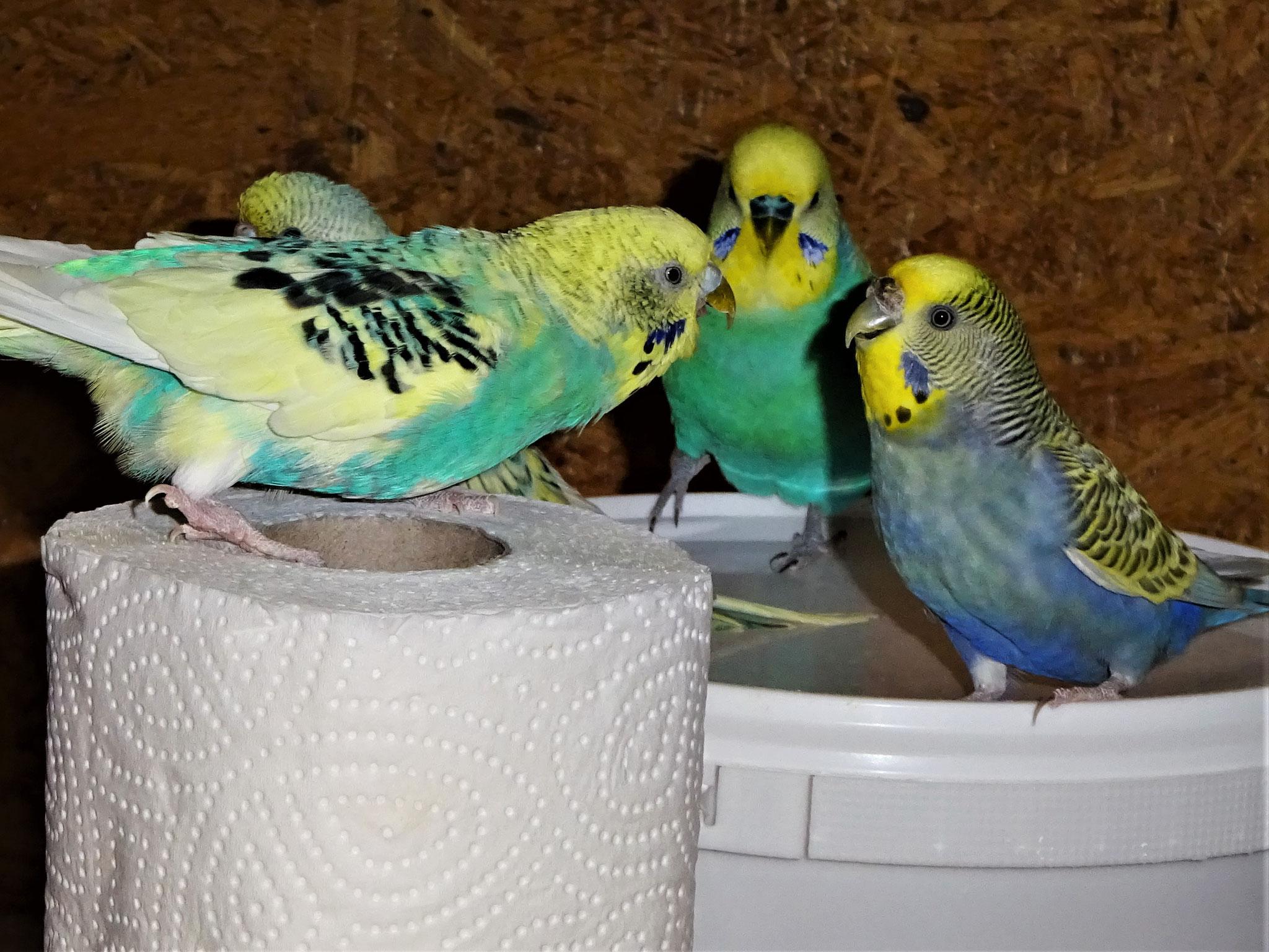 Tiffi, Felix, Flo, Tini