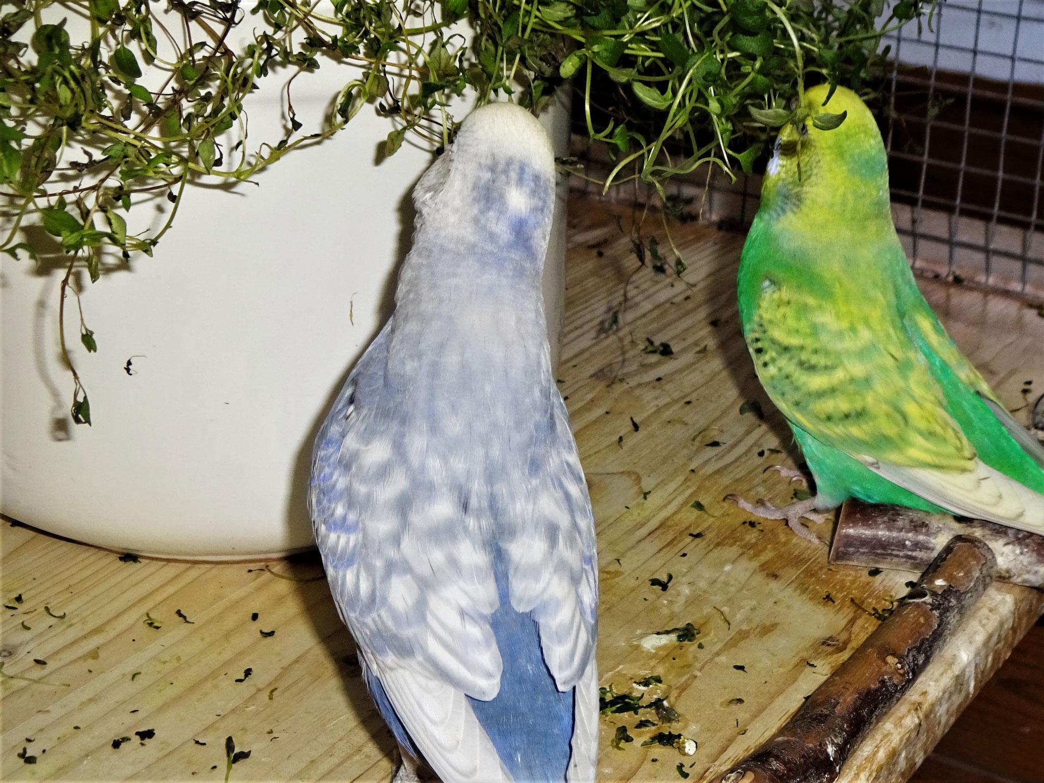 Monty und Feli