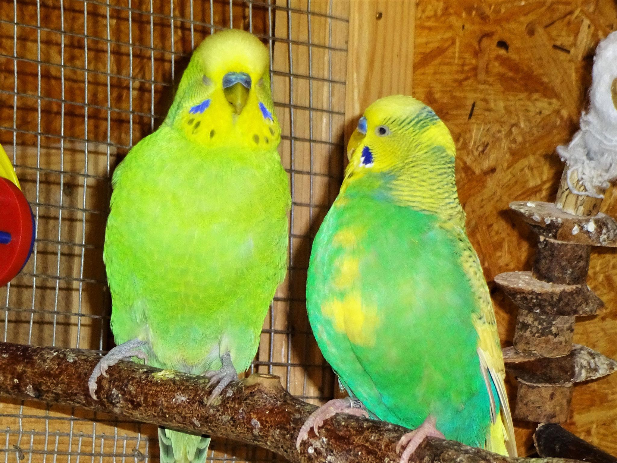 Filou und Kalle