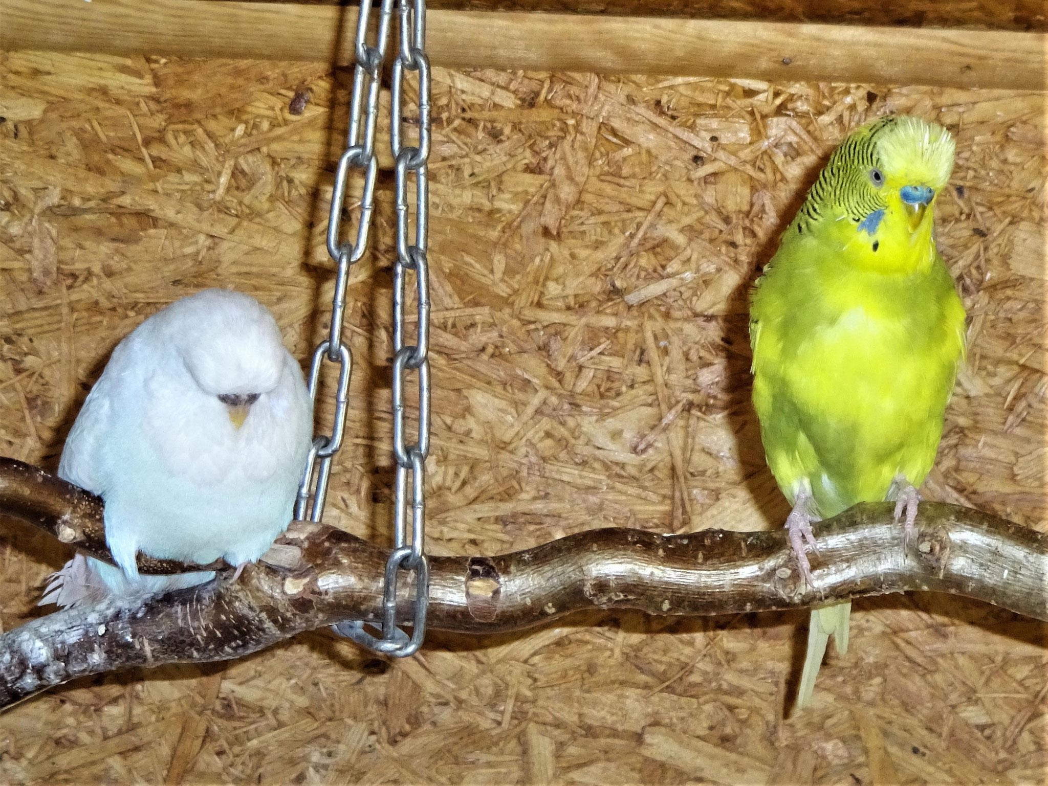 Cleo und Oscar