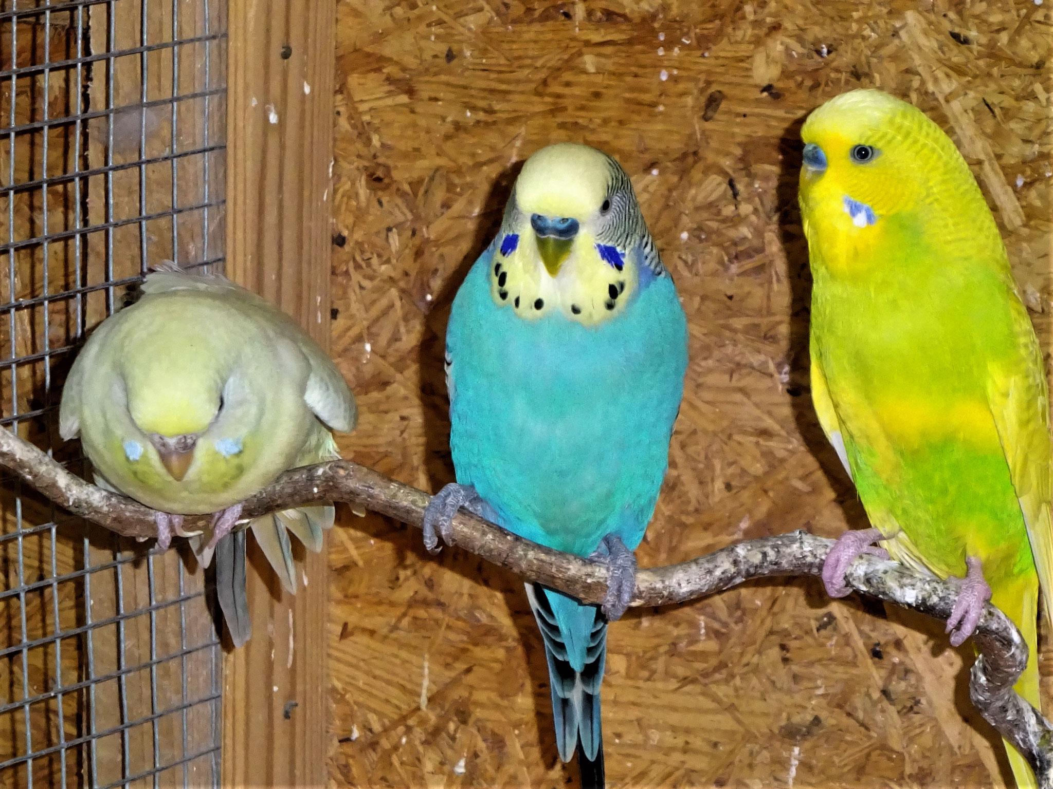 Flocke, Jordy und Benny