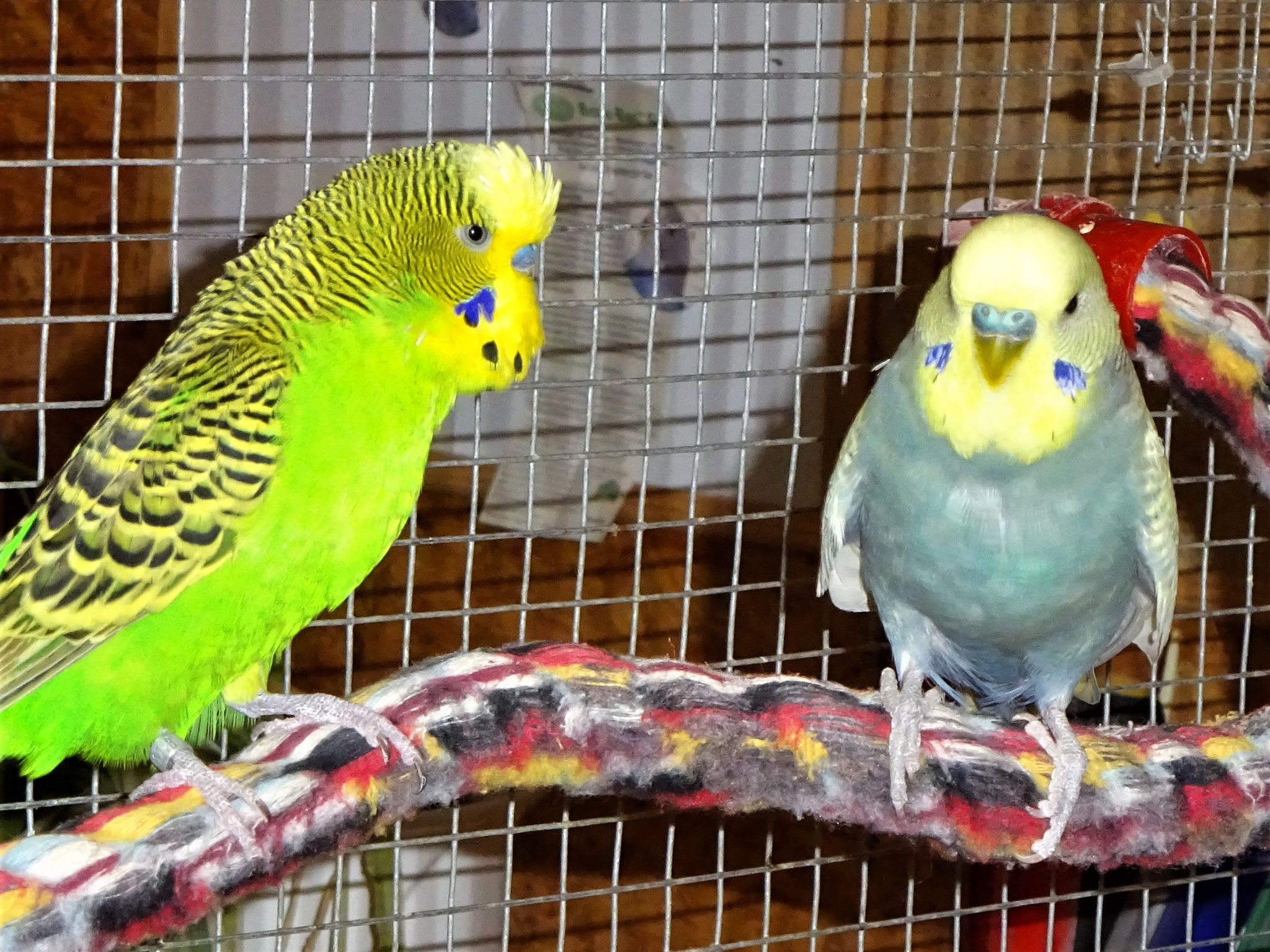 Flip und Leroy (...die Zwei mögen sich)