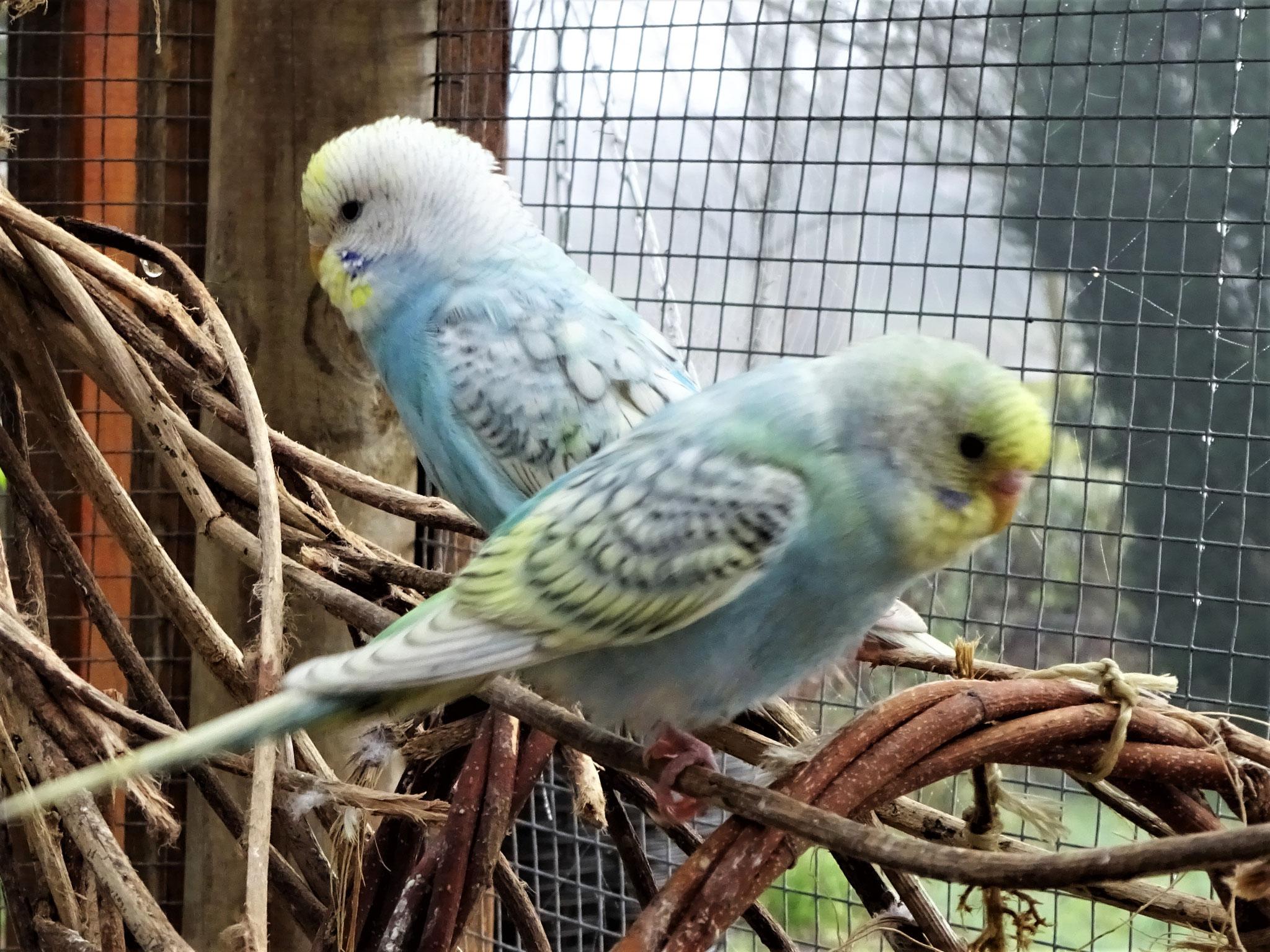Anni und Felix