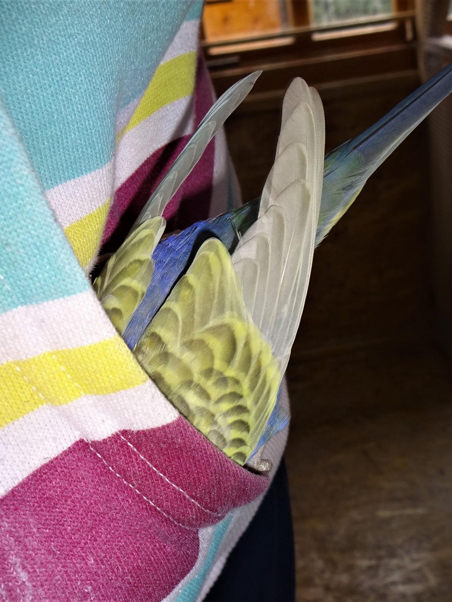 ...und Tini in der Tasche ;-)...