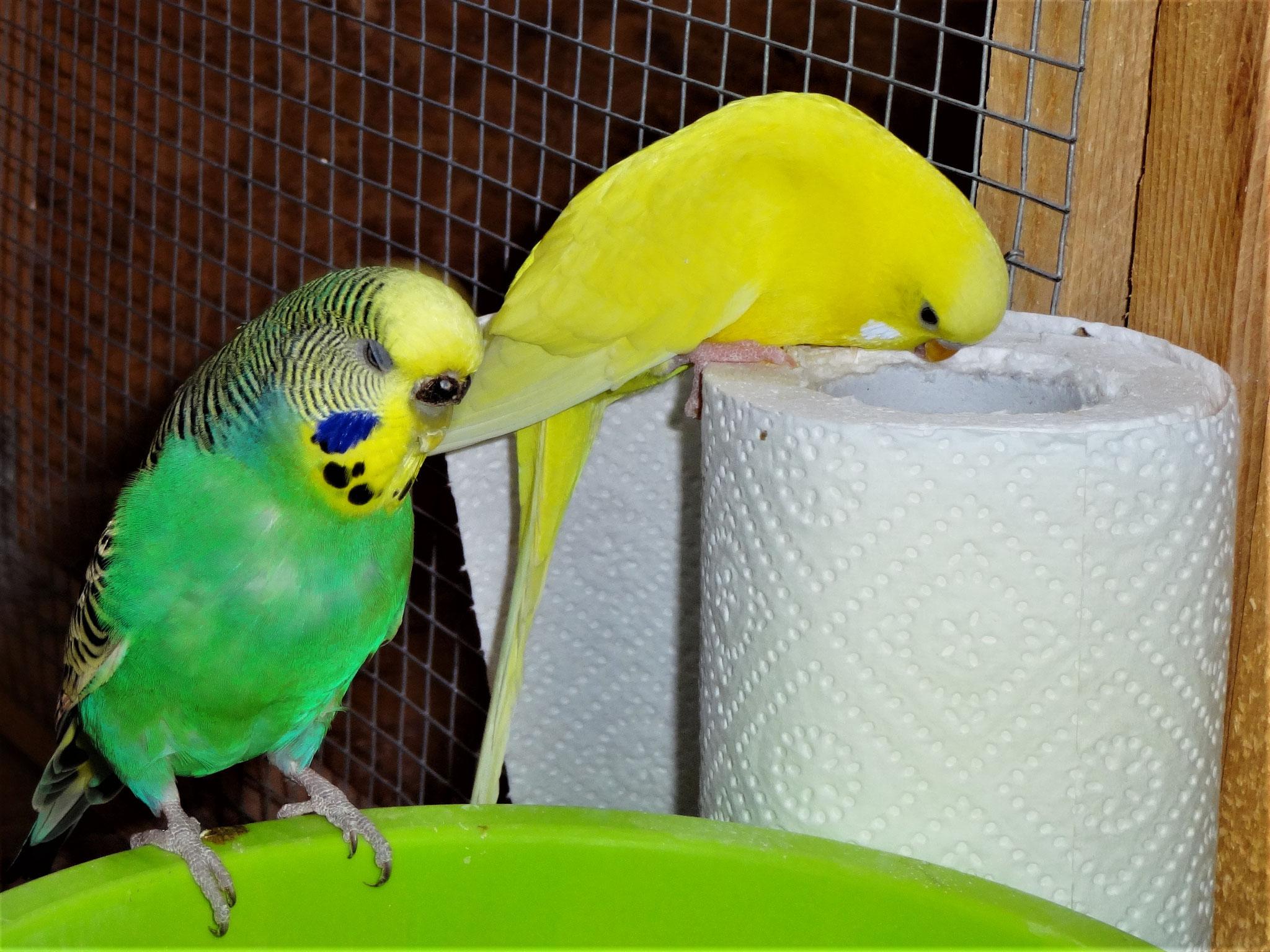 Lotte und Pepe