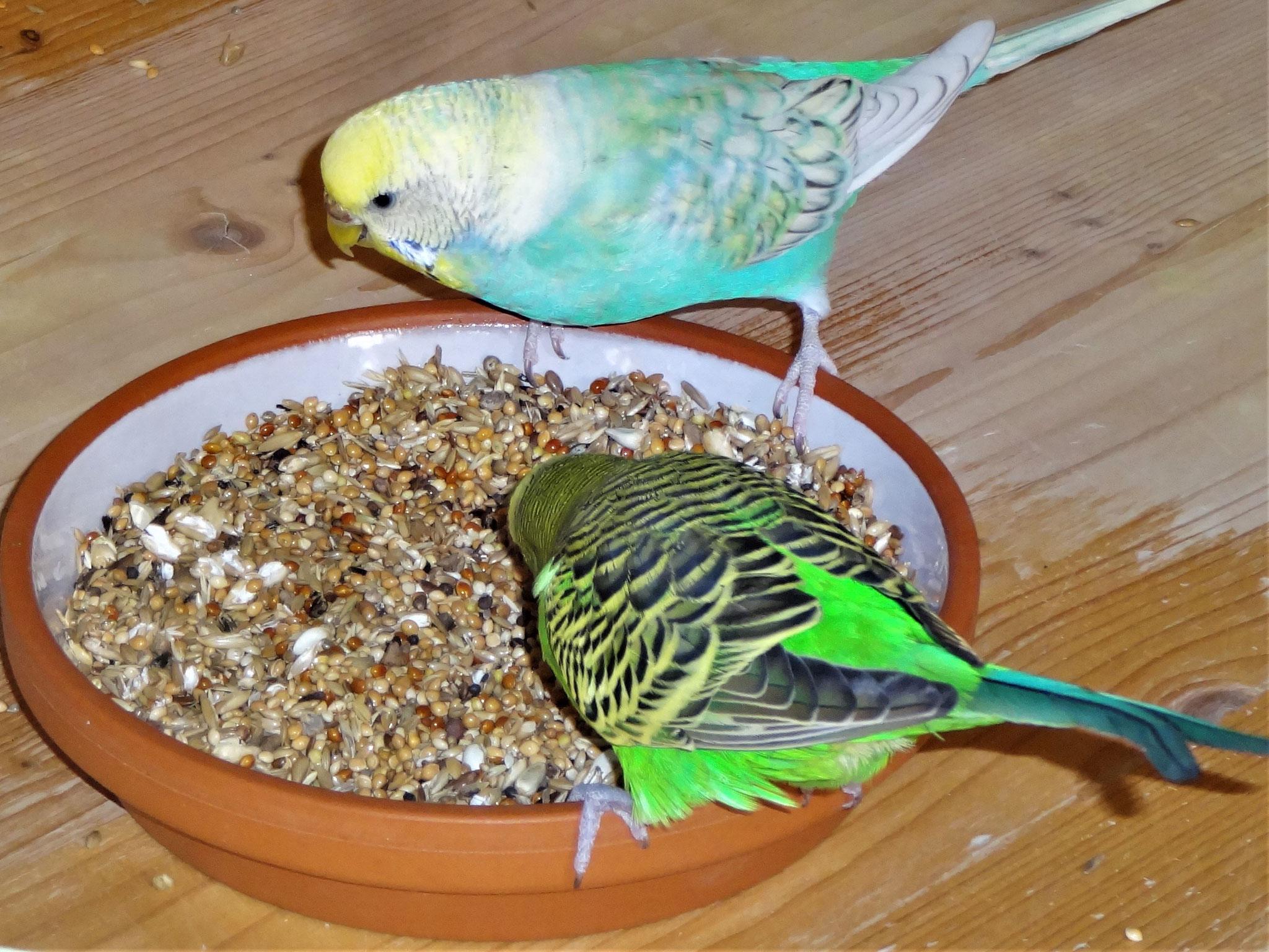 Anni und Flip beim gemeinsamen Frühstück :-)