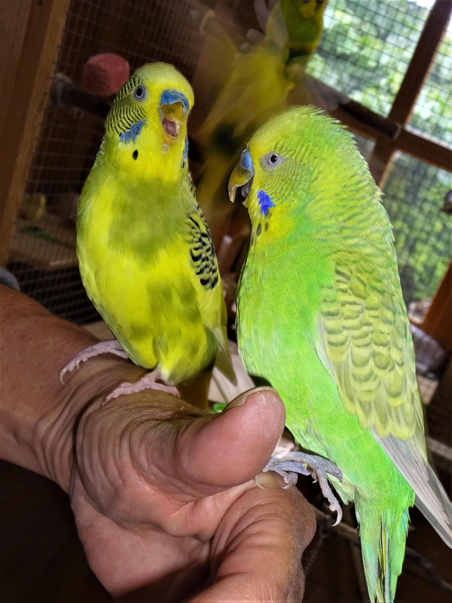 Oscar und Filou