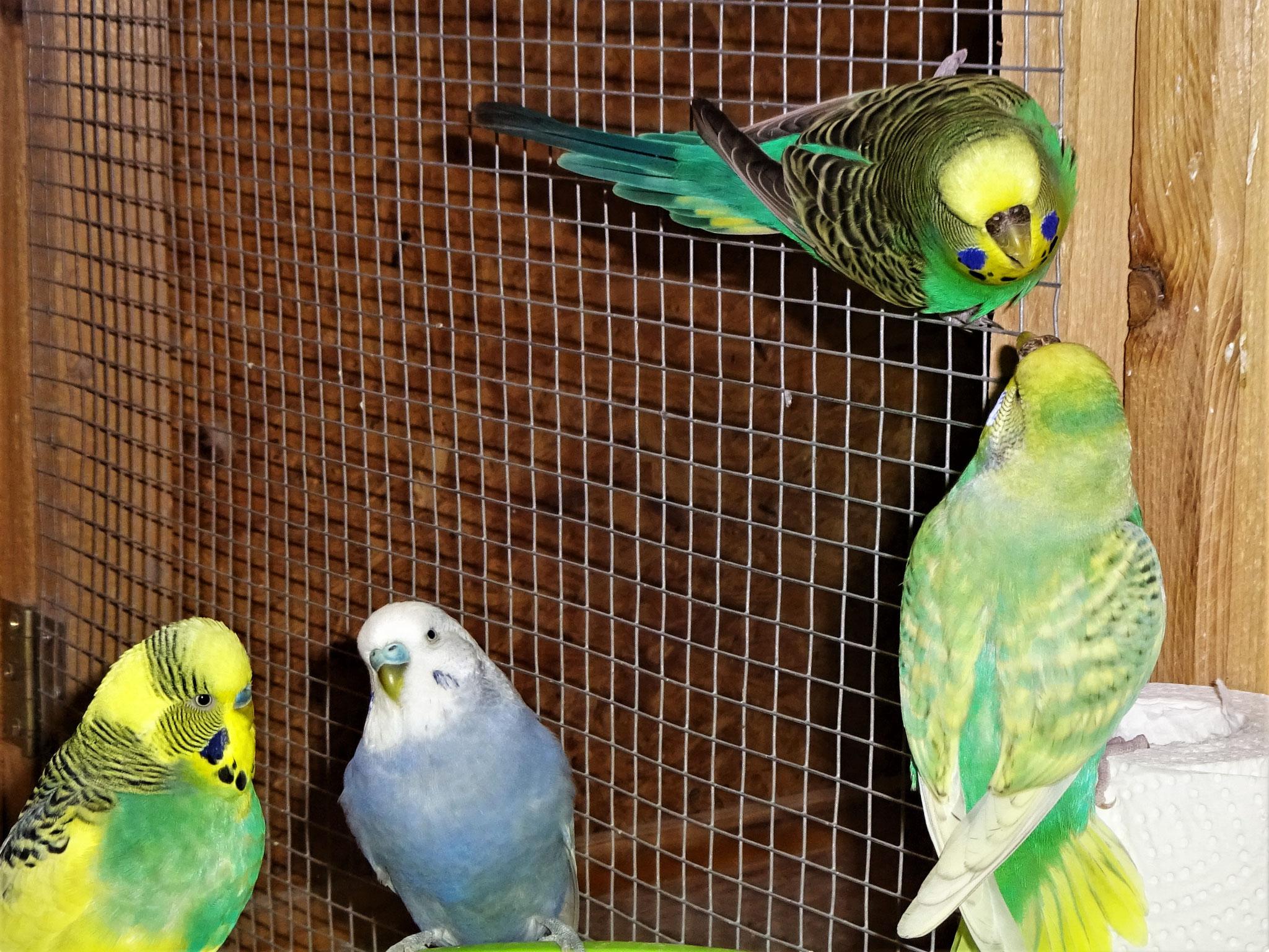 Strolchi, Monty, Lotte und Feli