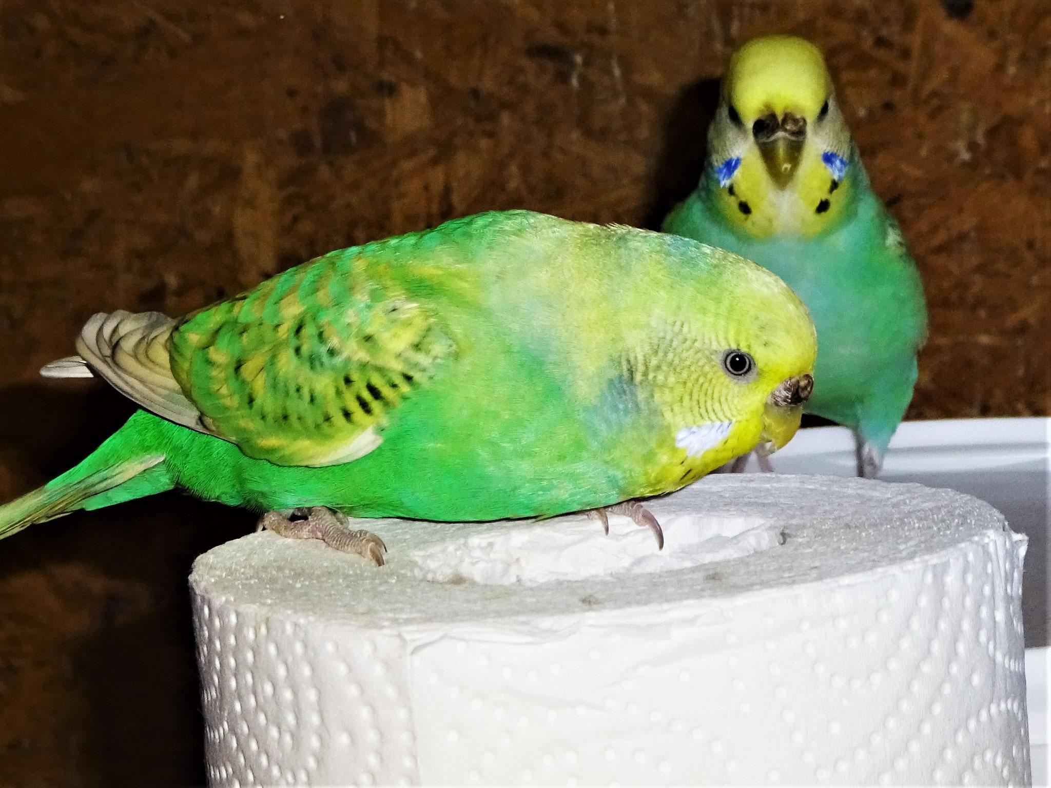 Feli und Anni