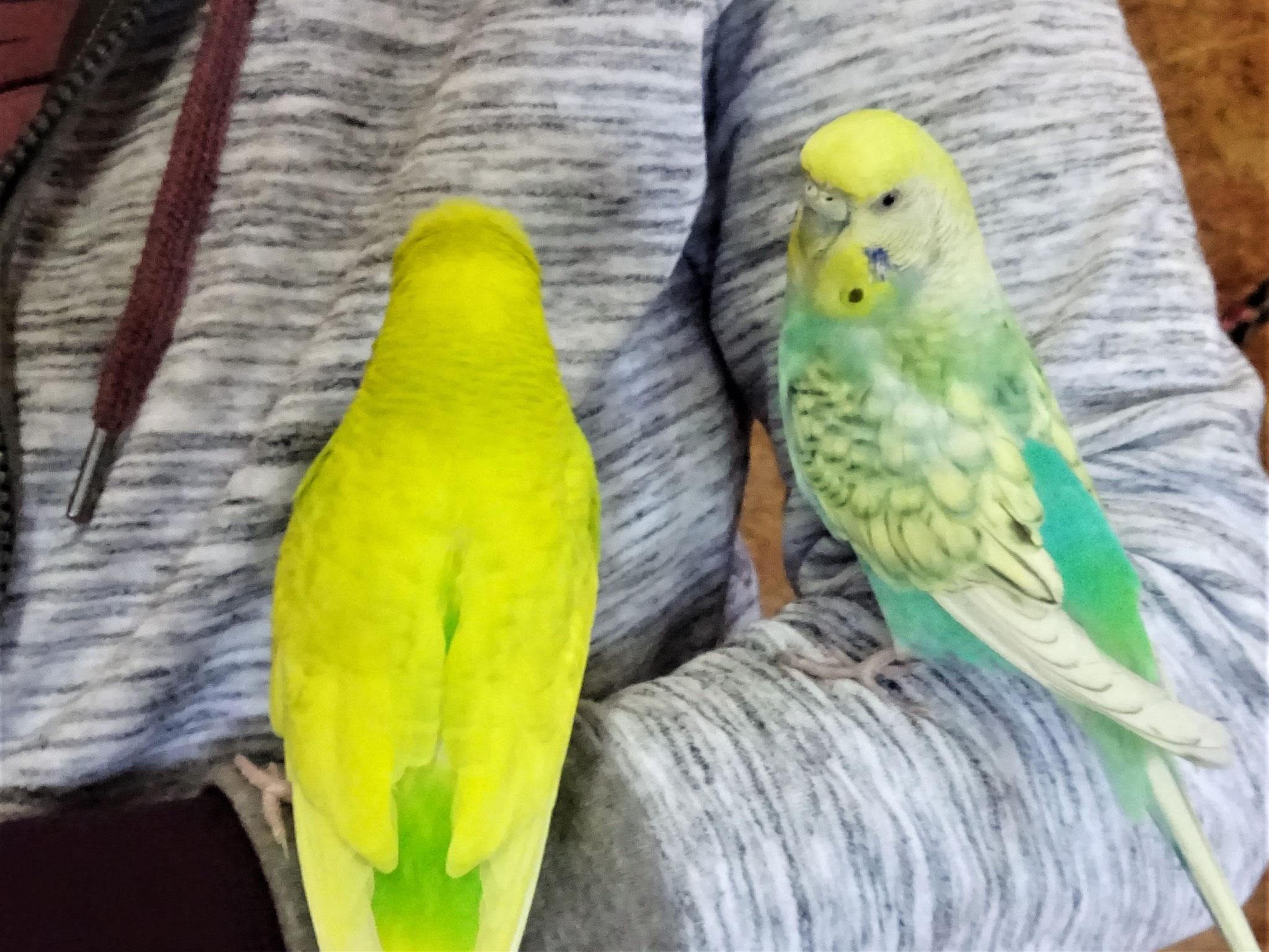 Benny und Anni