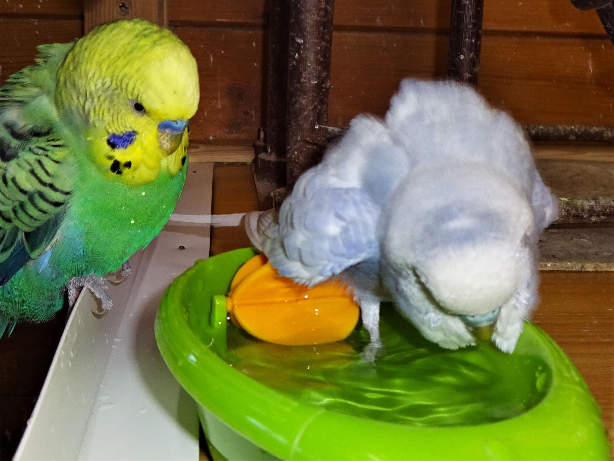 Smarty und Monty