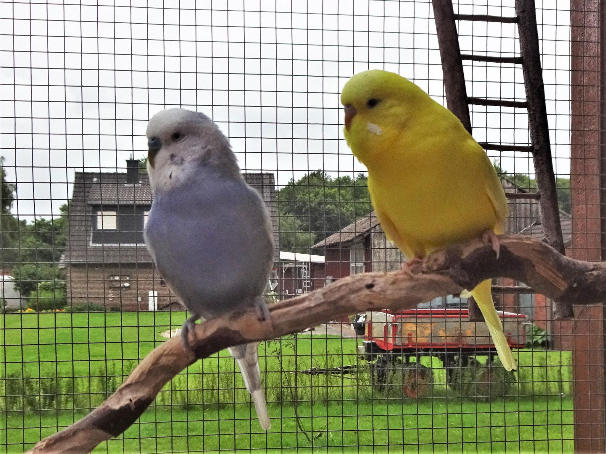 Monty und Pepe