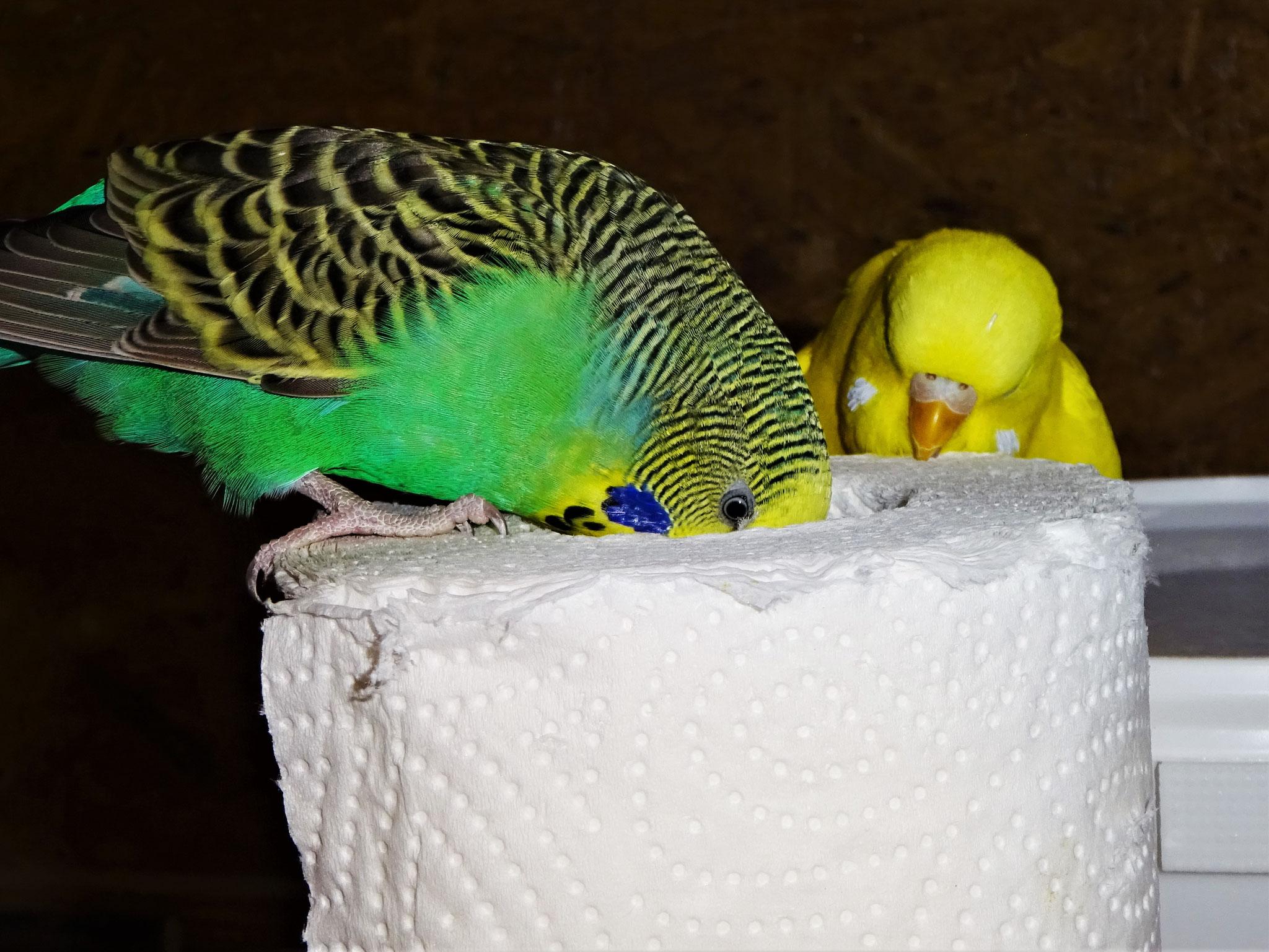 Lotte und mein Pepe :-)