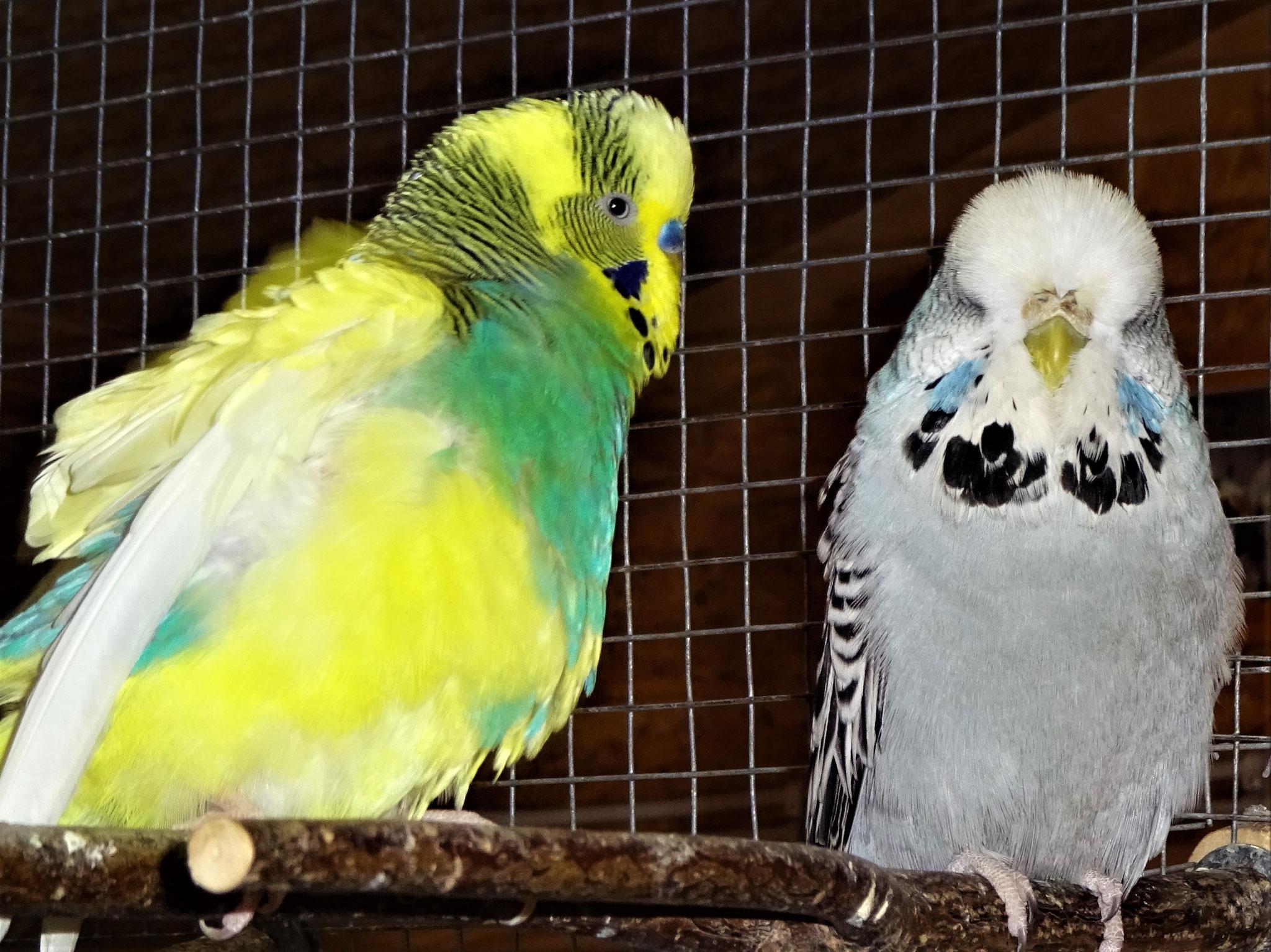 Strolchi und Queeny