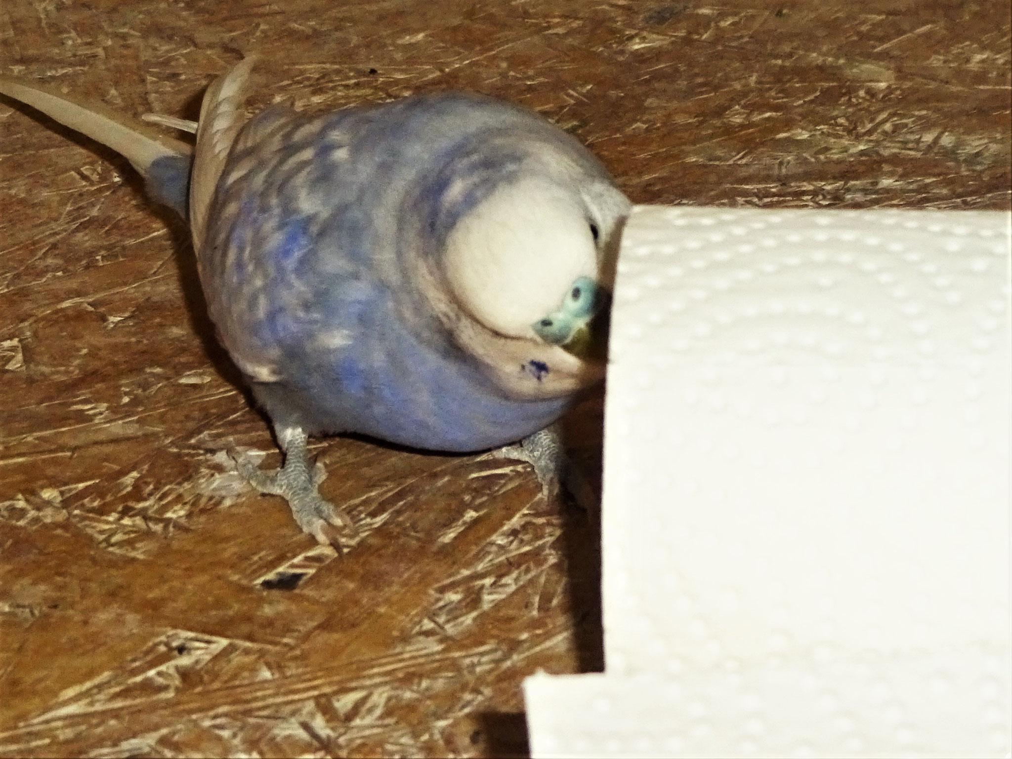 Monty untersucht die Rolle am Boden   ;-)