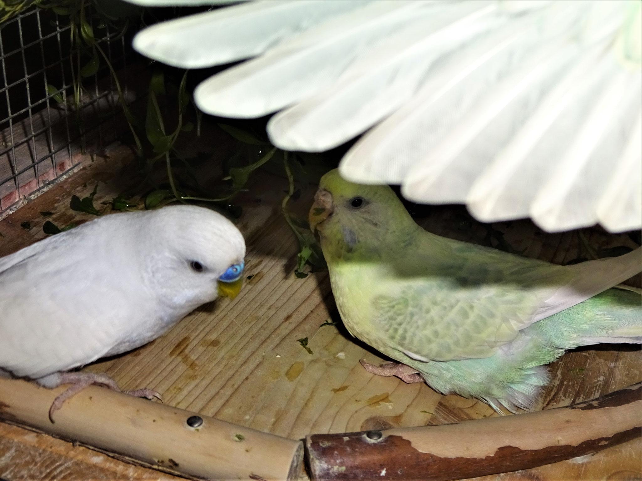 Virgil ind Flocke unter´m Flügeldach