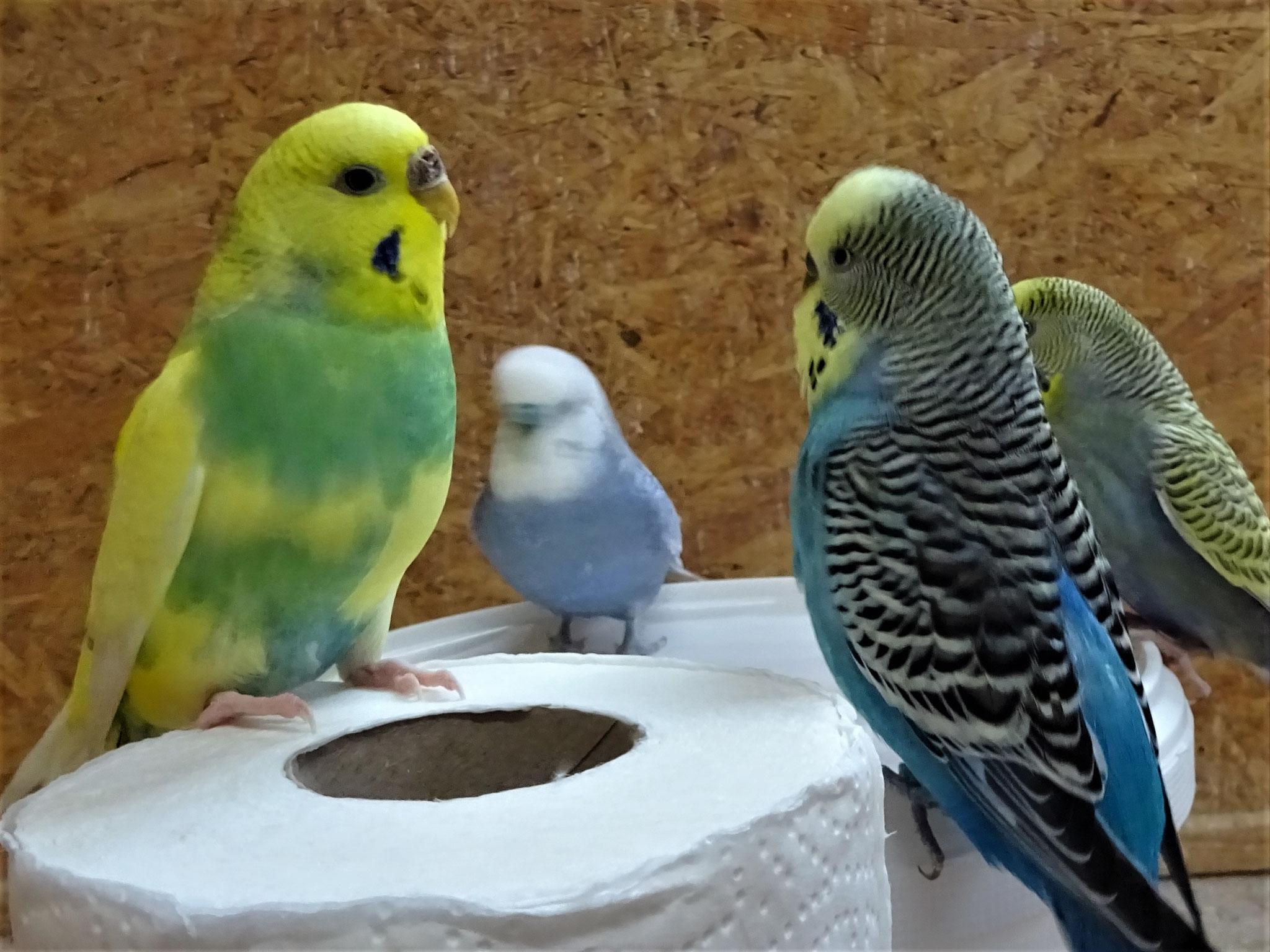 vorne: Miss Patty und Jordy, hinten: Monty und Tini
