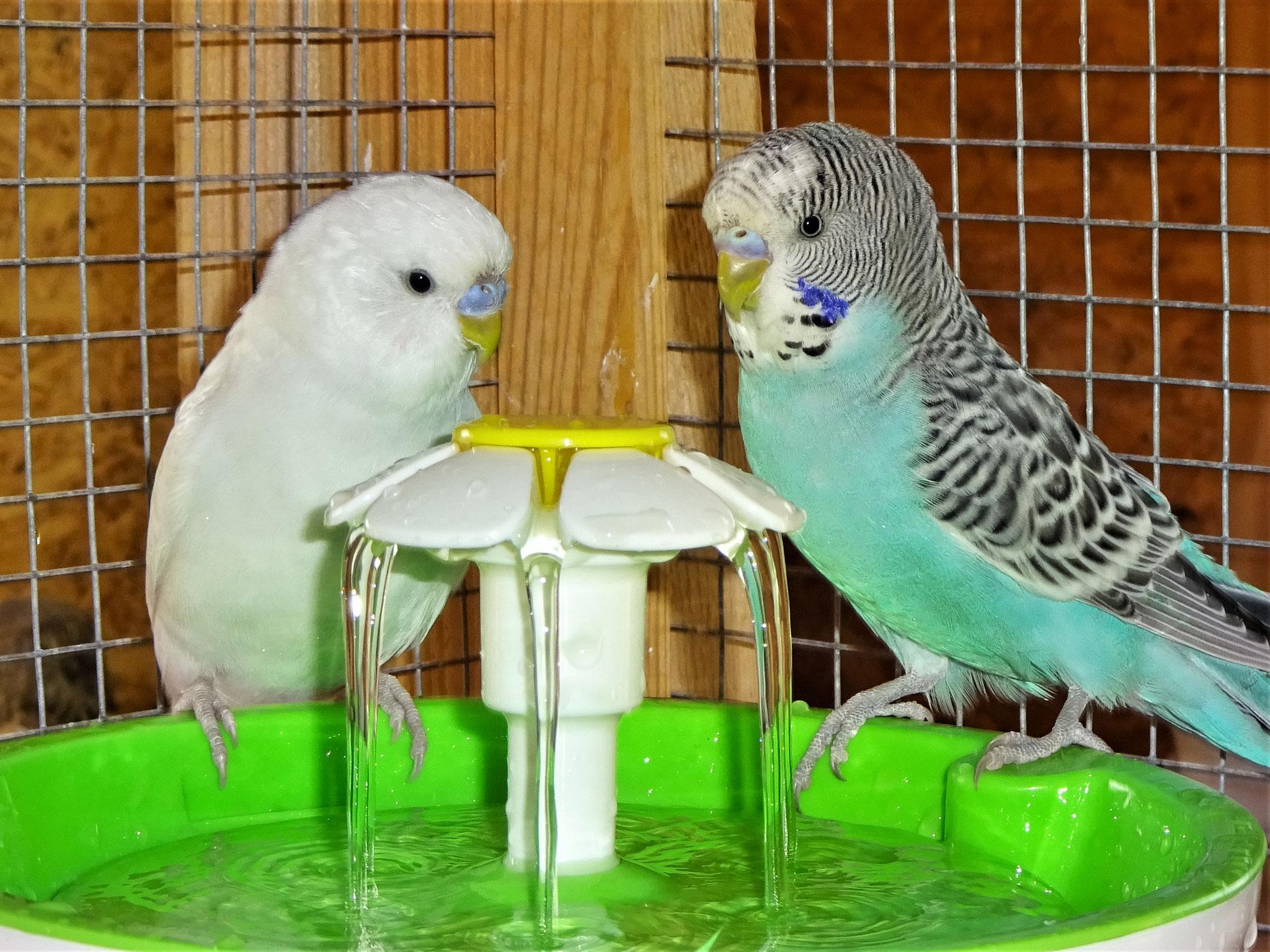 Vergil und Rudi