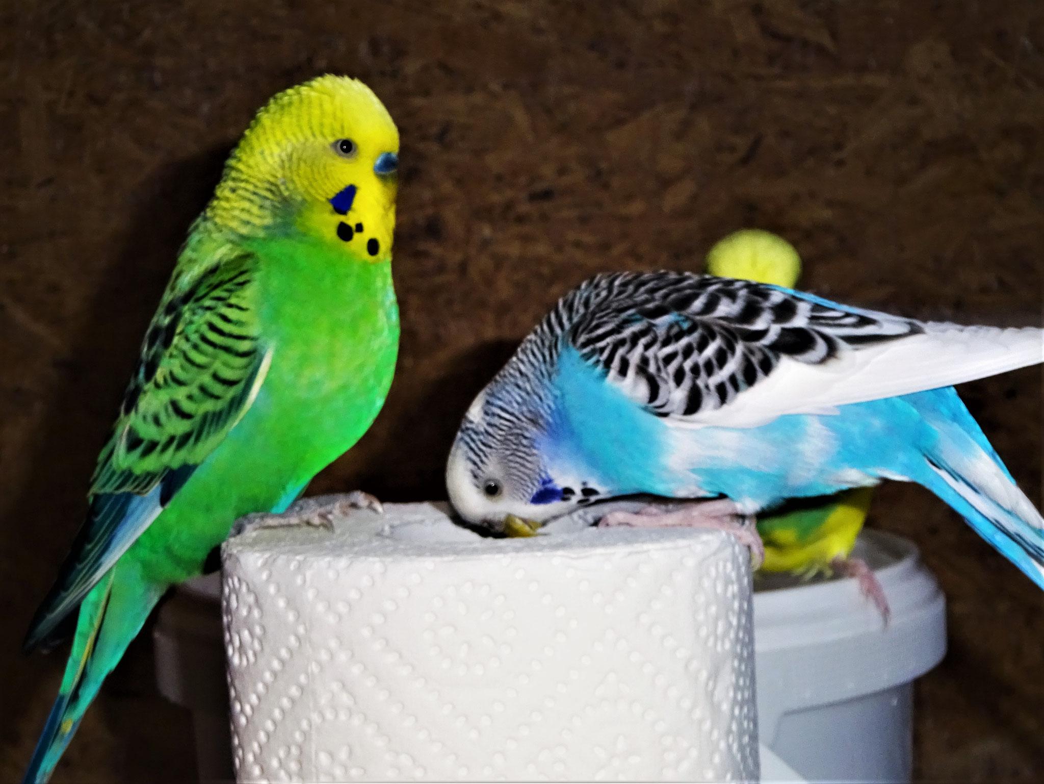 Smarty und Joline