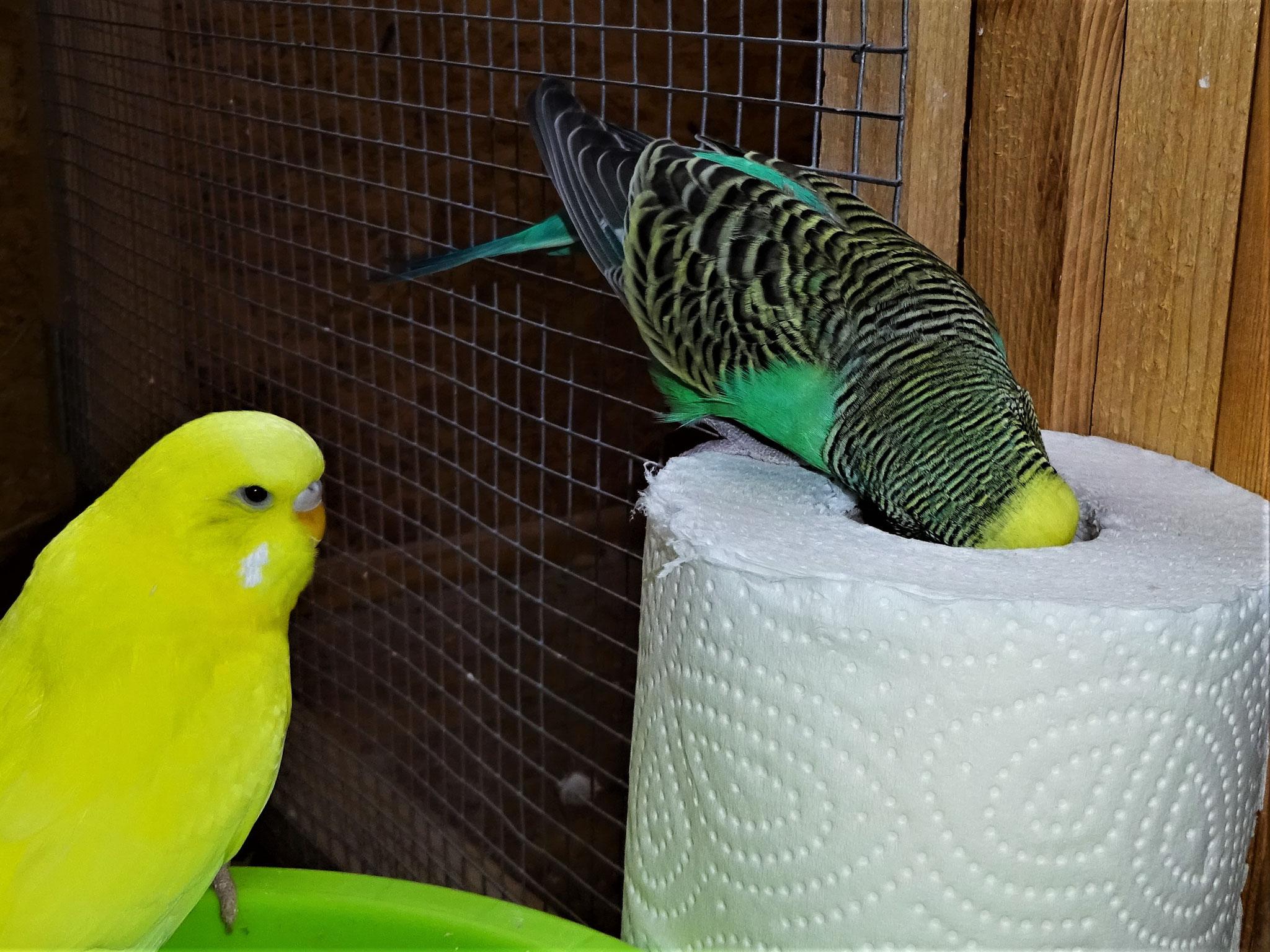 Pepe und Lotte