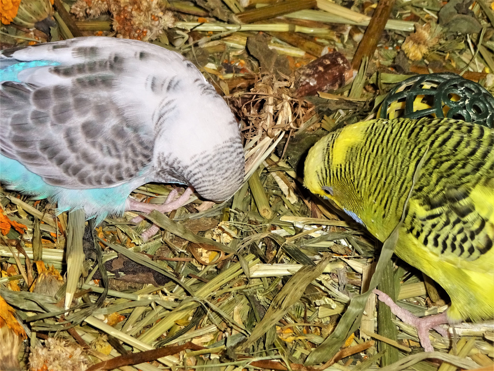 Pearly und Oscar