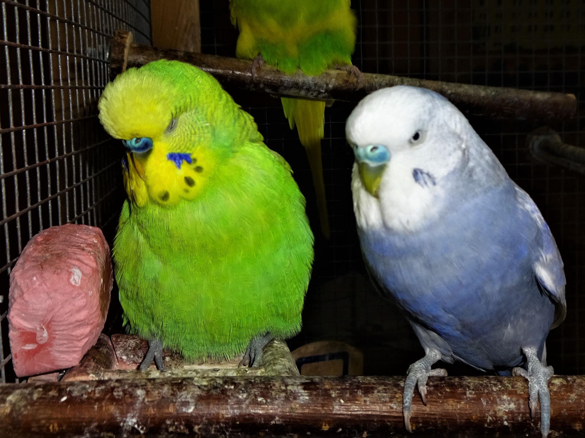 Filou und Monty