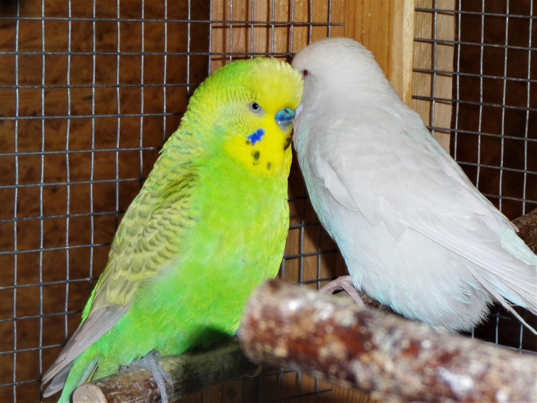 Filou und seine Cleo :-)