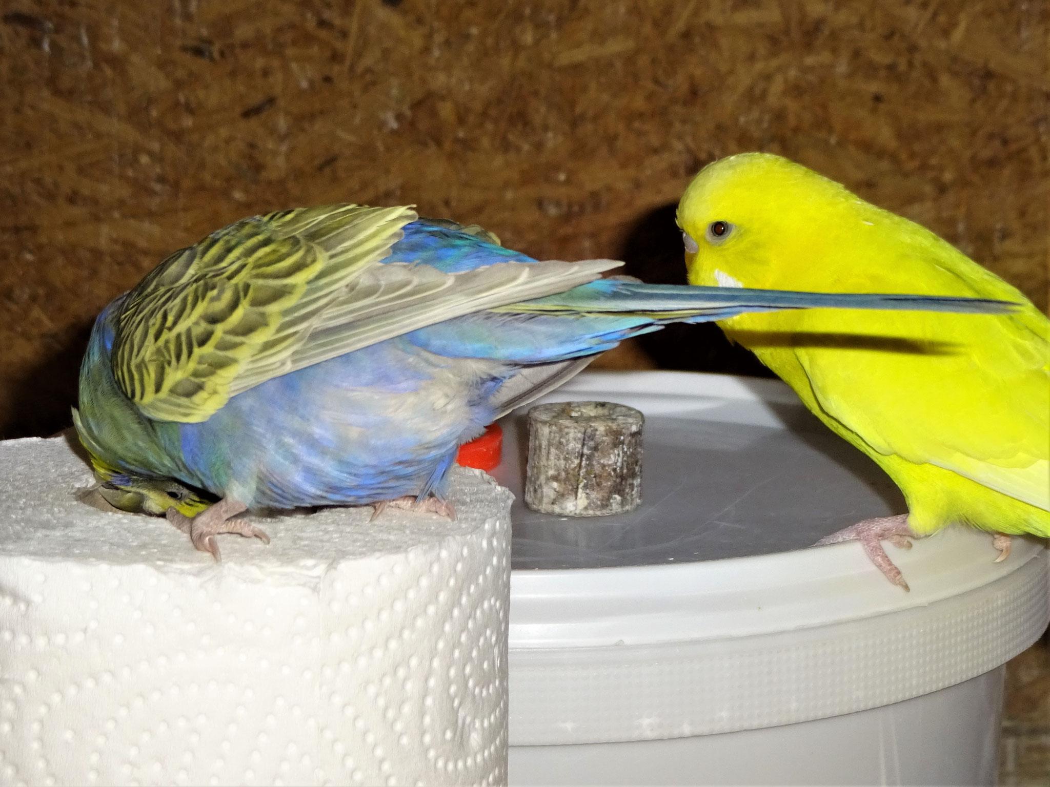 Tini und Pepe