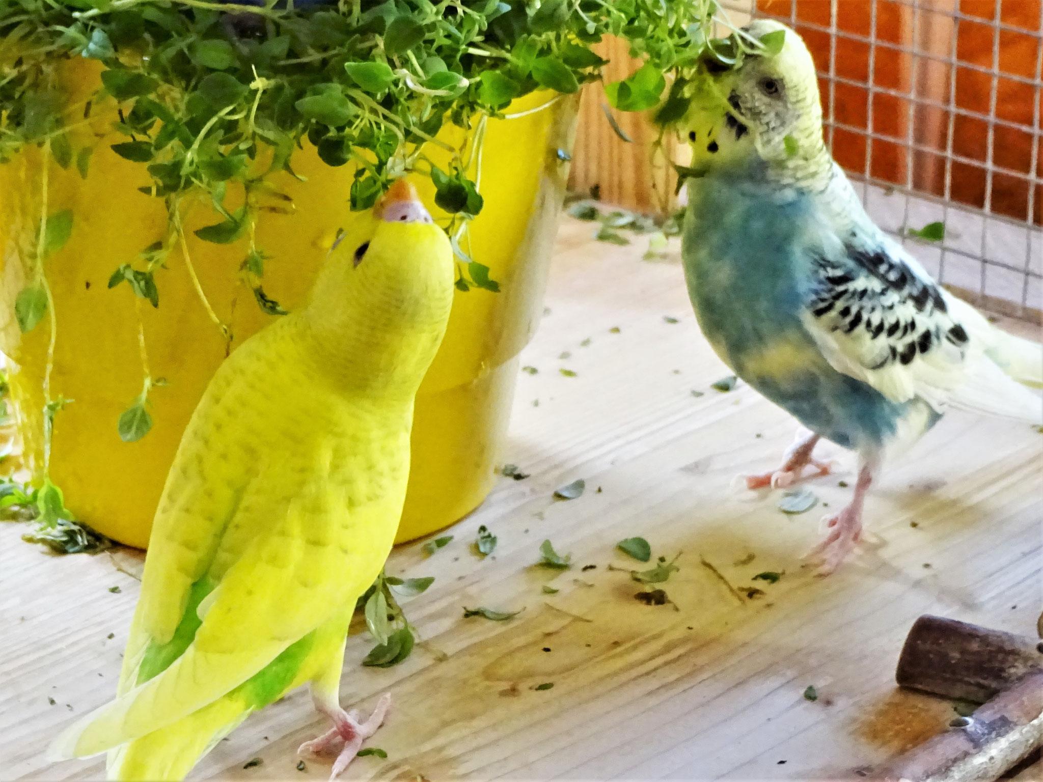 Benny und Tiffi