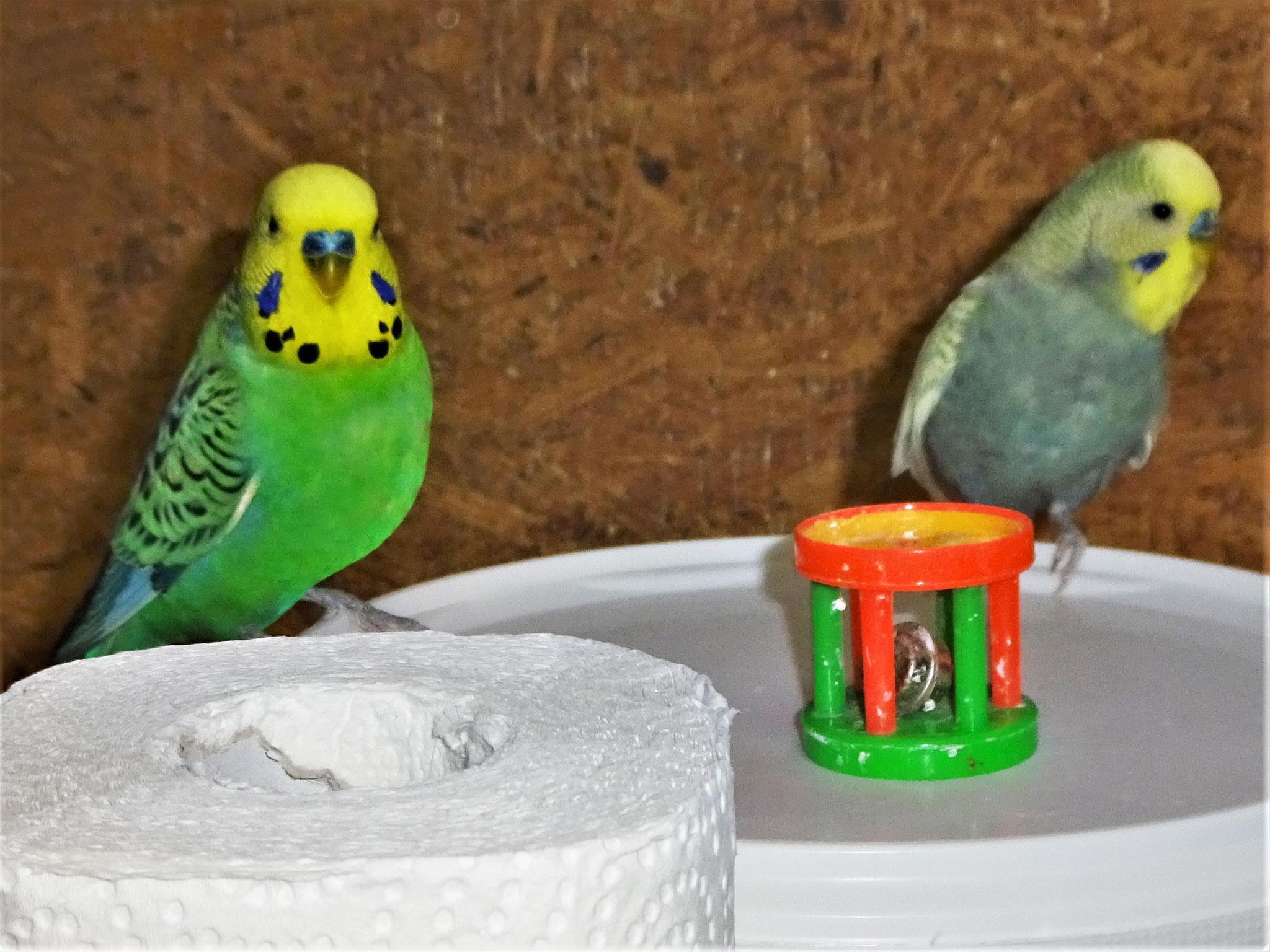 Smarty und Leroy