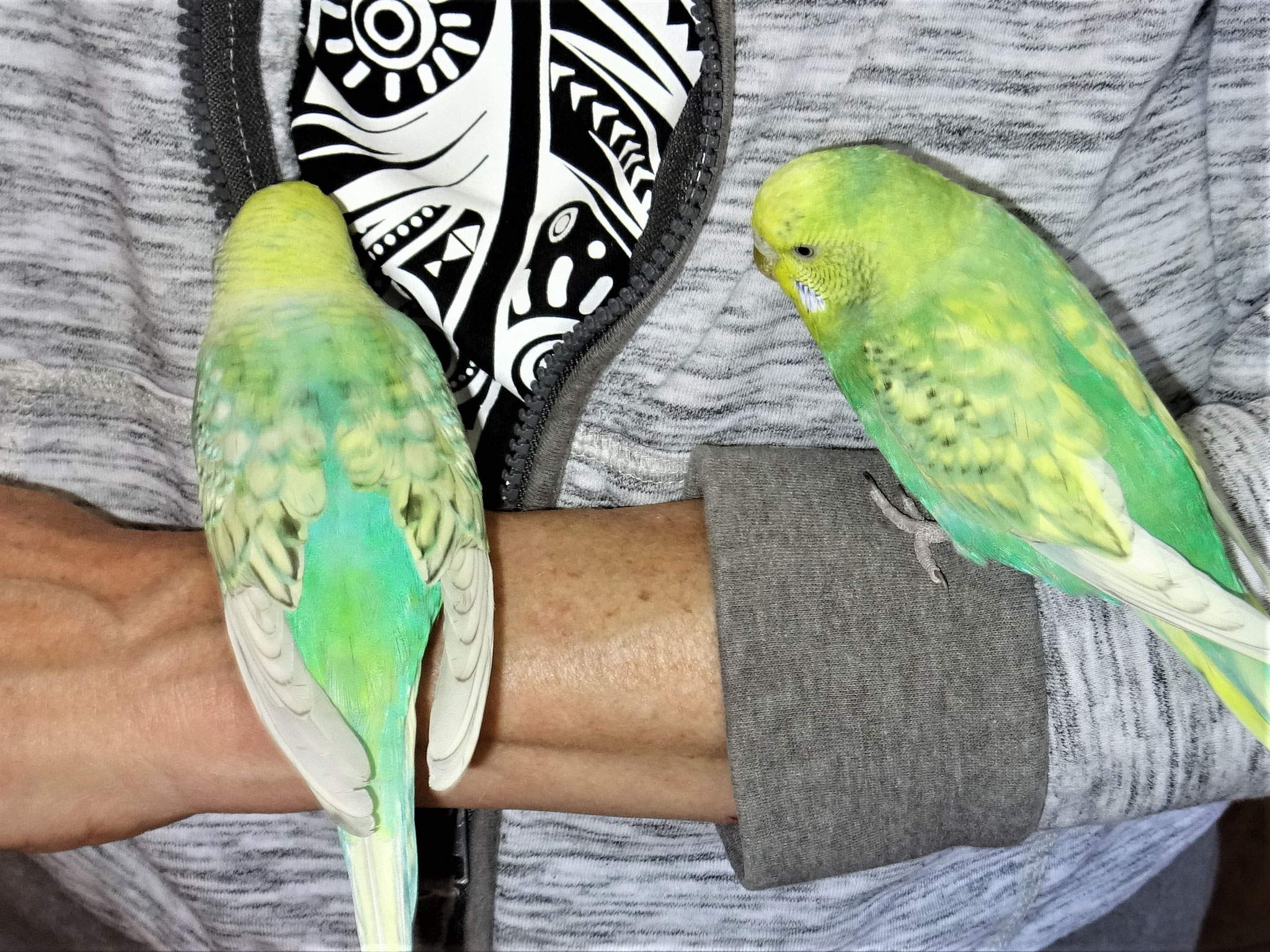 Anni und Feli