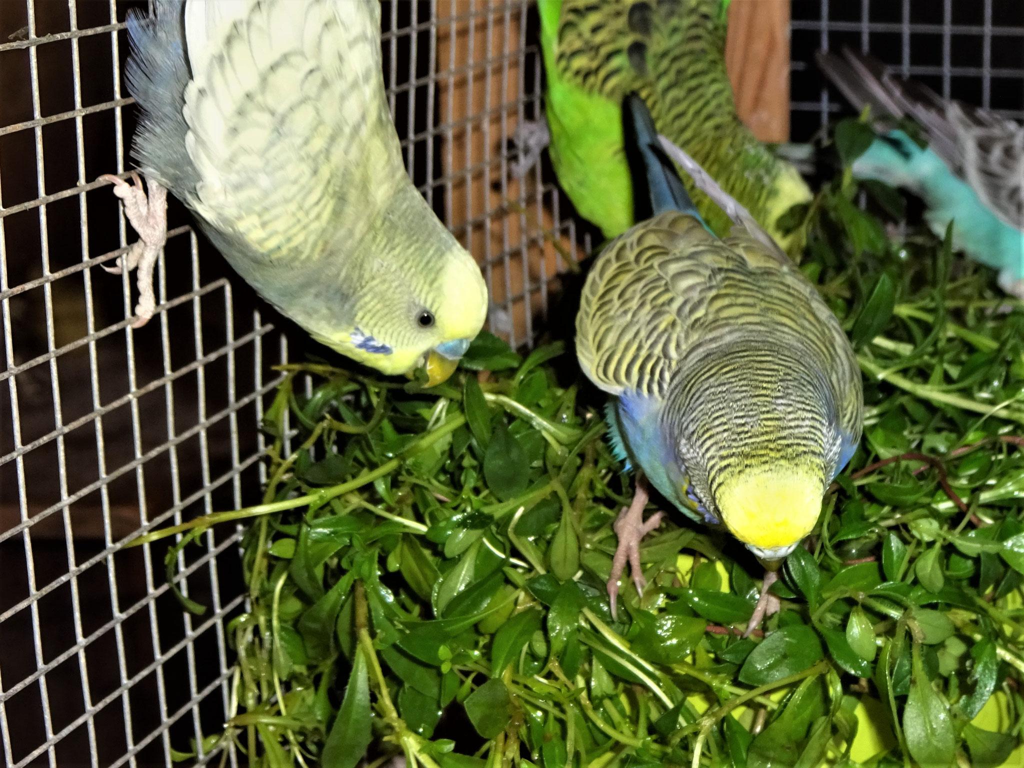 Leroy und Tini