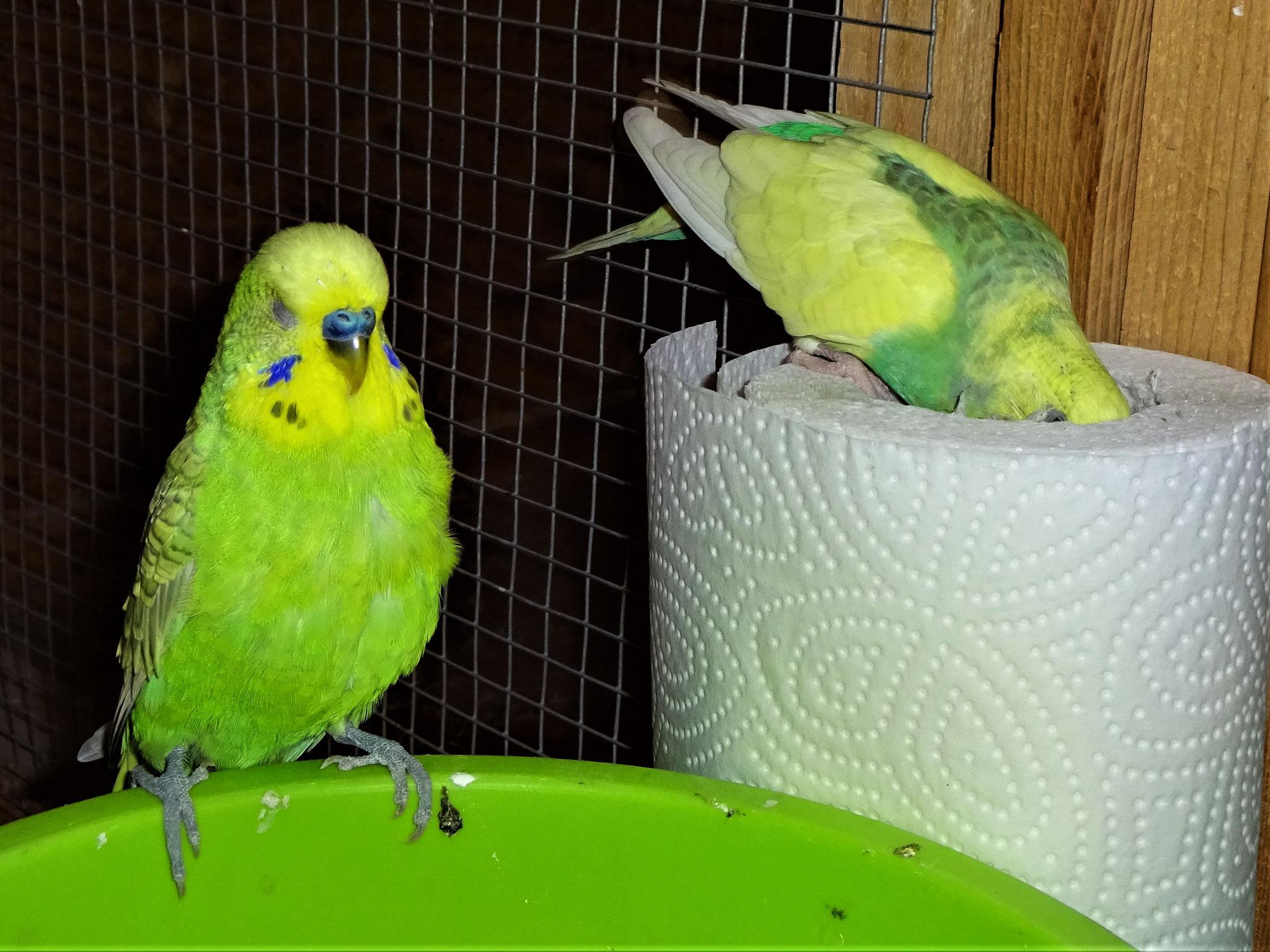 Filou und Miss Patty