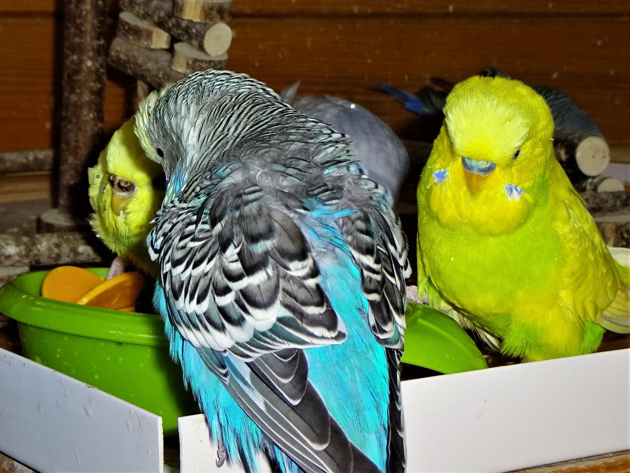 ...aber nur kurz. Jordy und Miss Patty sind wieder da :-)))...