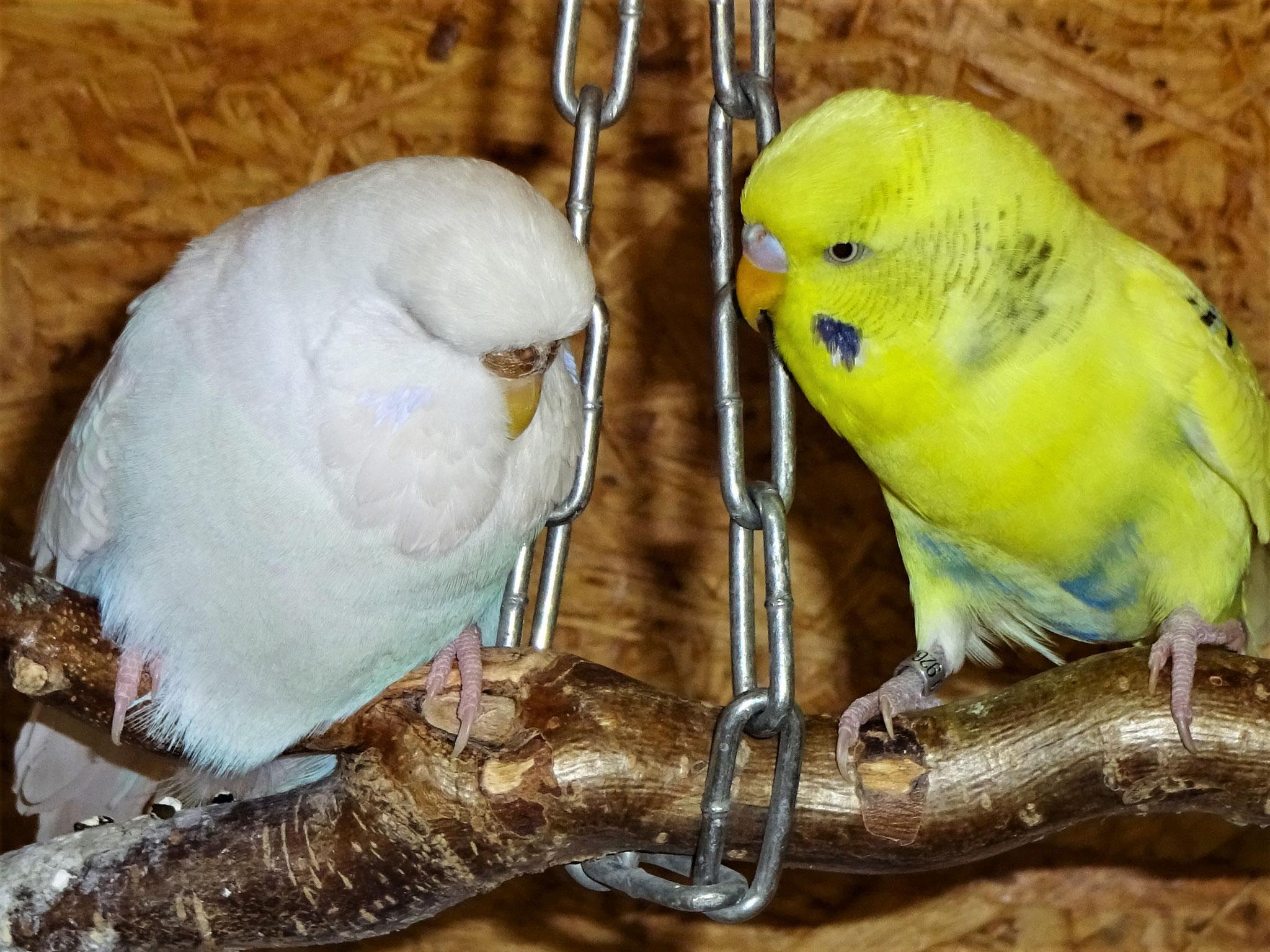 Cleo und Tommy