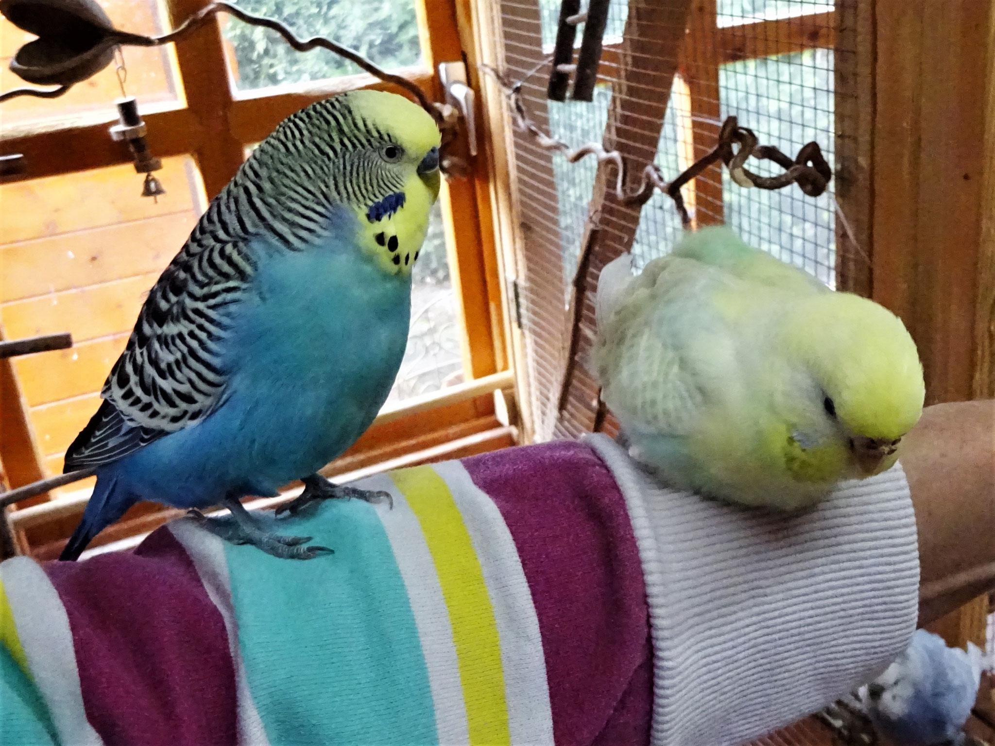 Jordy und Flocke