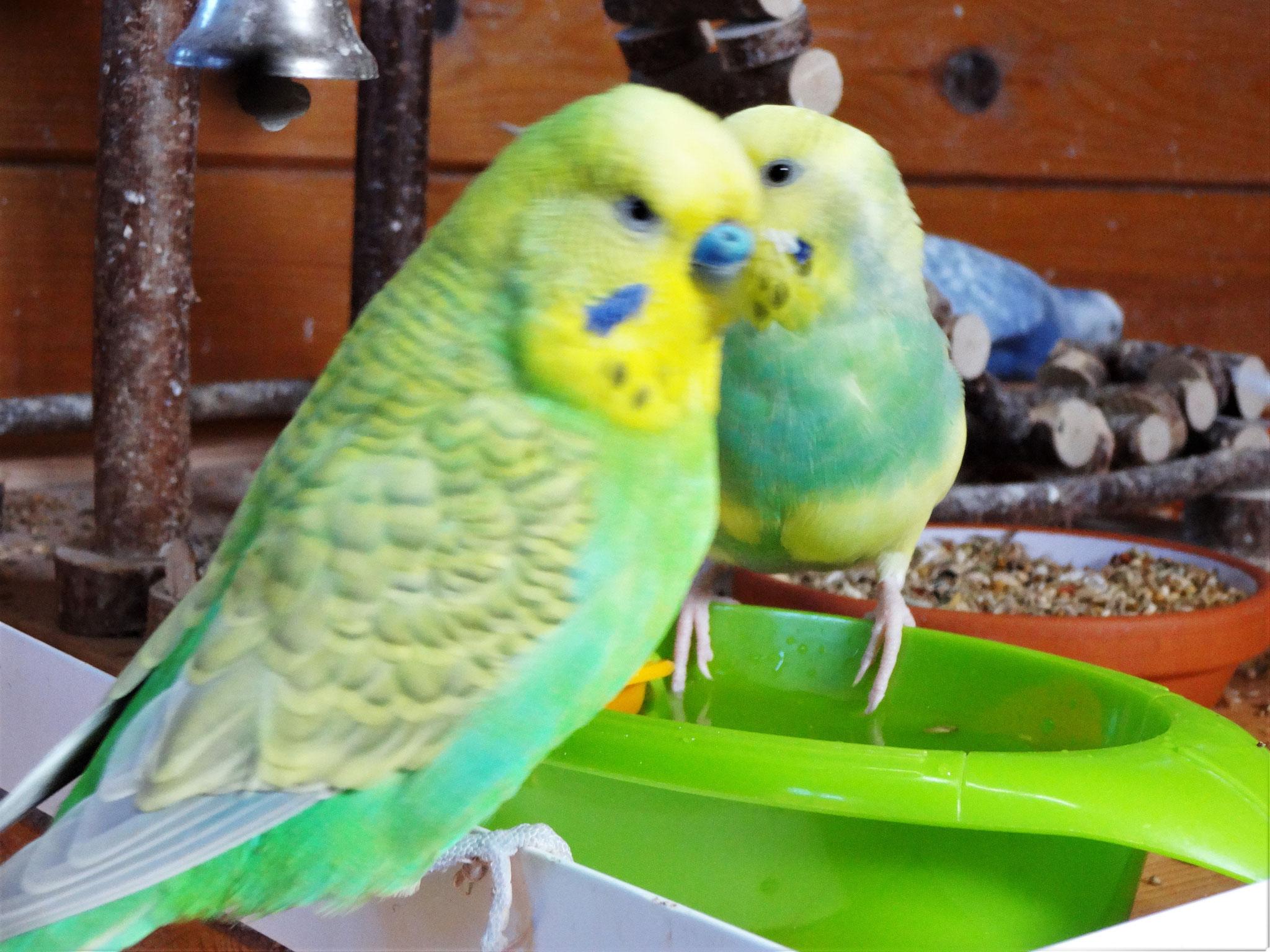 "Filou: ""Hey Patty, lass mal erst meine Cleo baden!!!"""