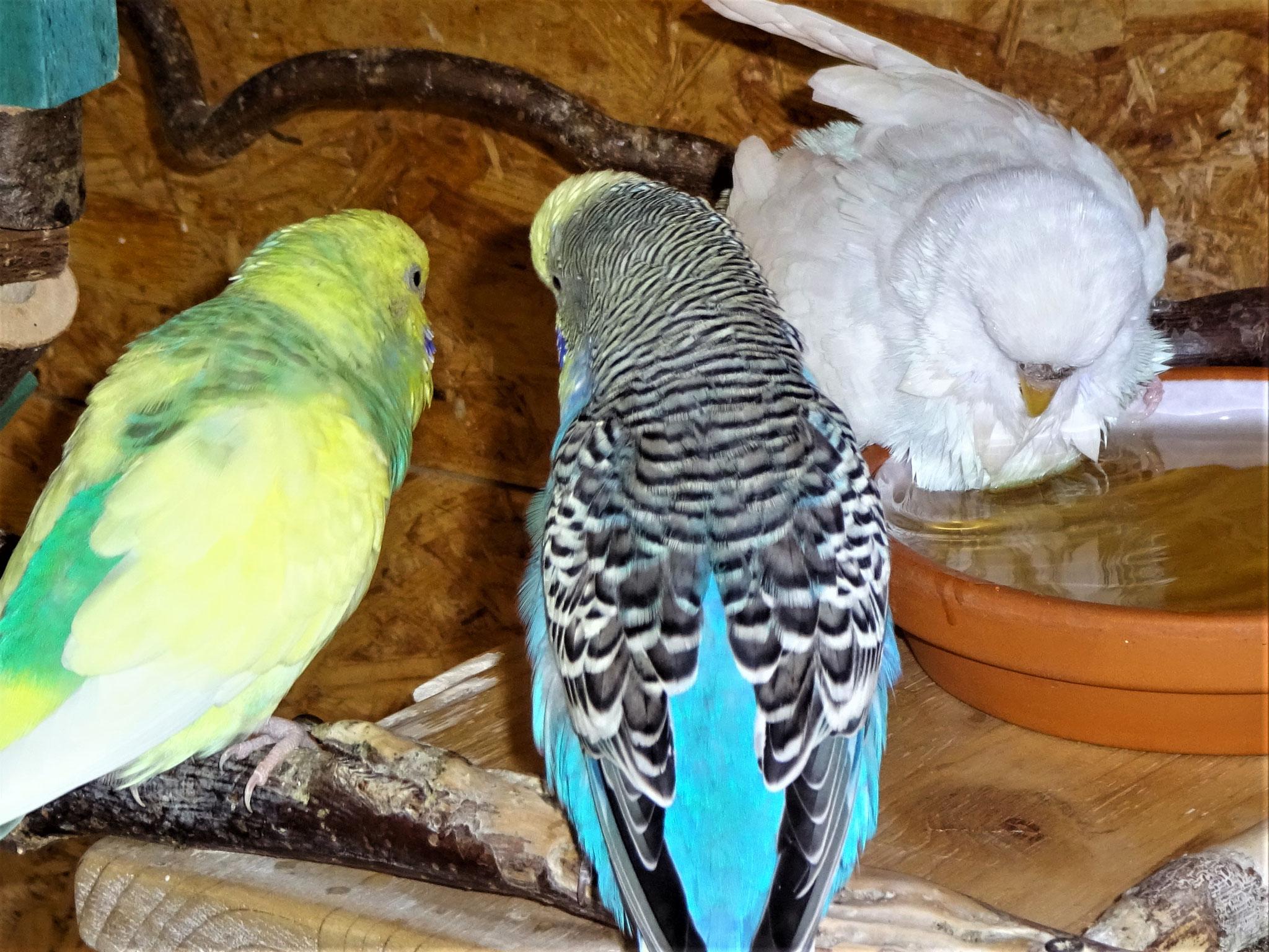 Miss Patty, Jordy und Cleo