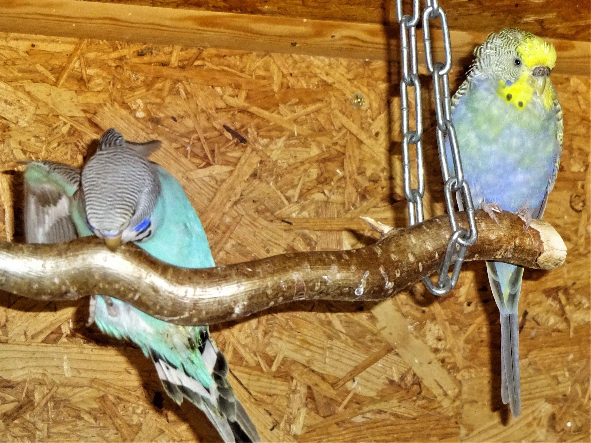 der Blaue und Tini