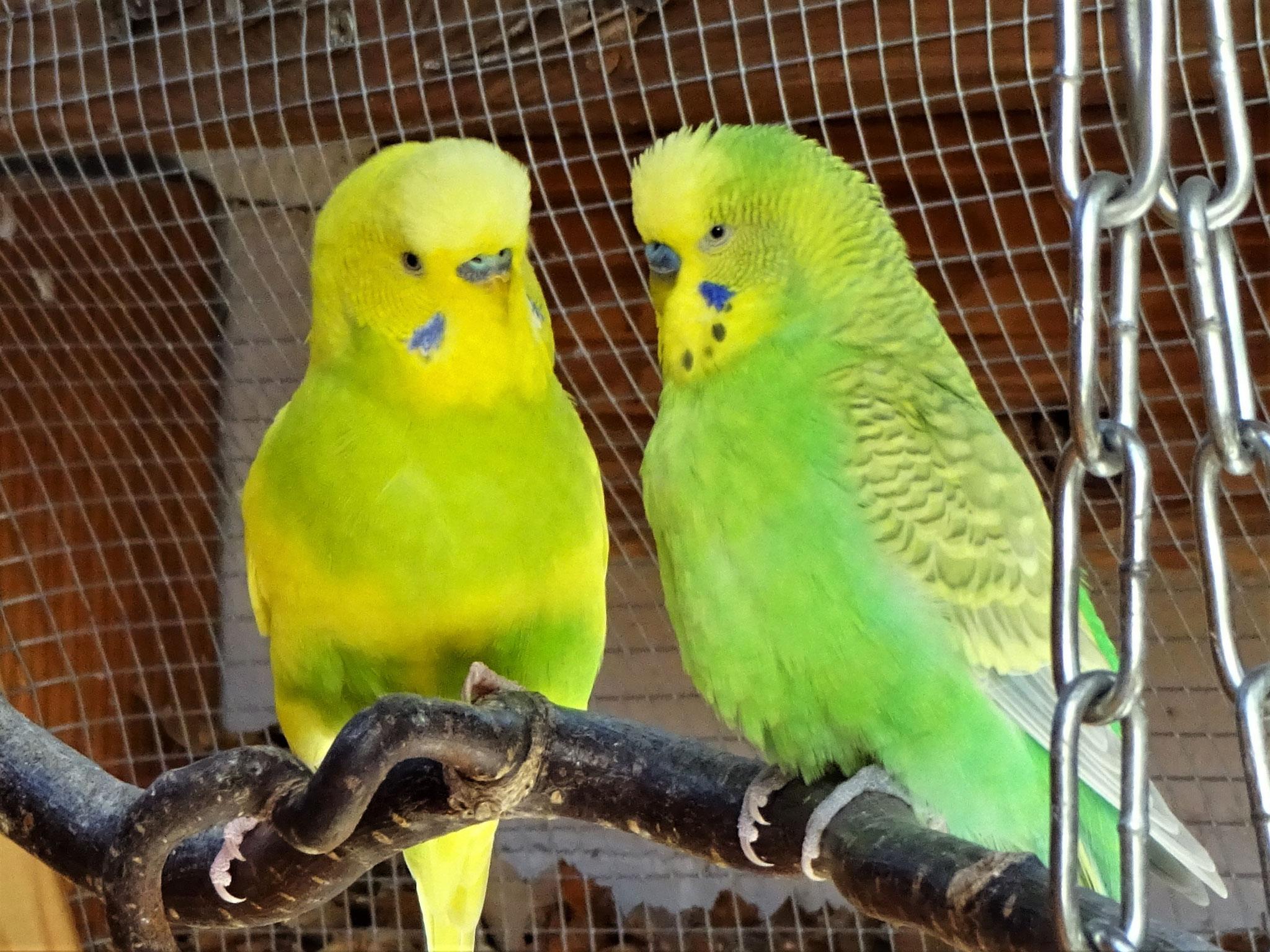 Benny und Filou