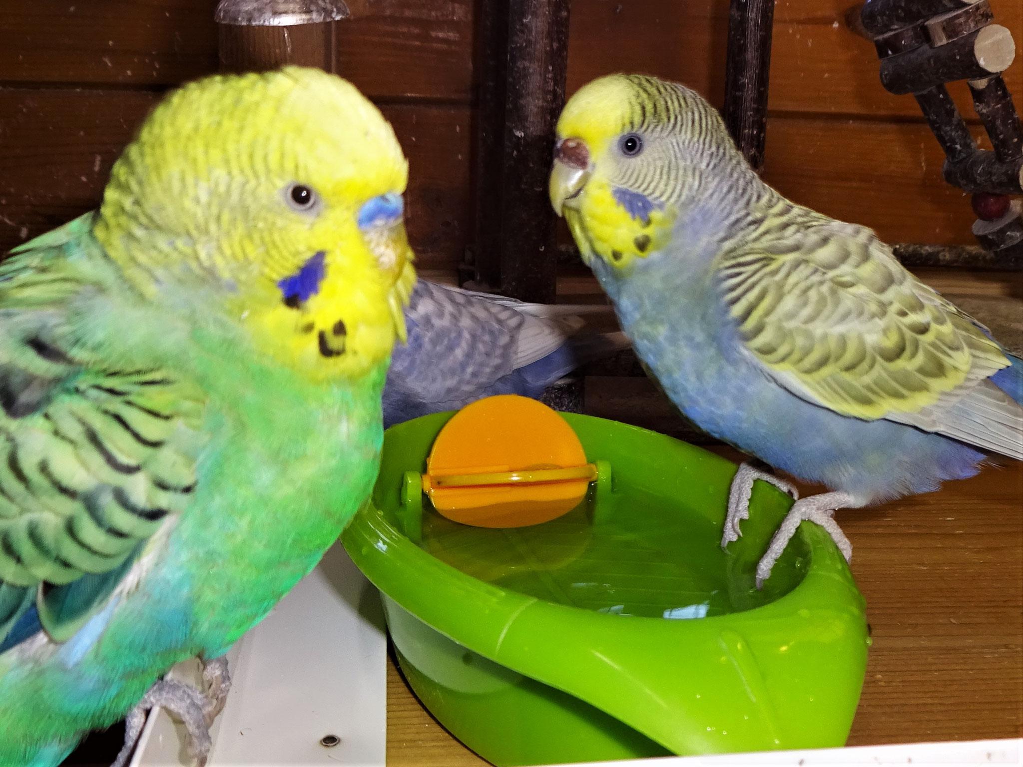 Smarty und Tini