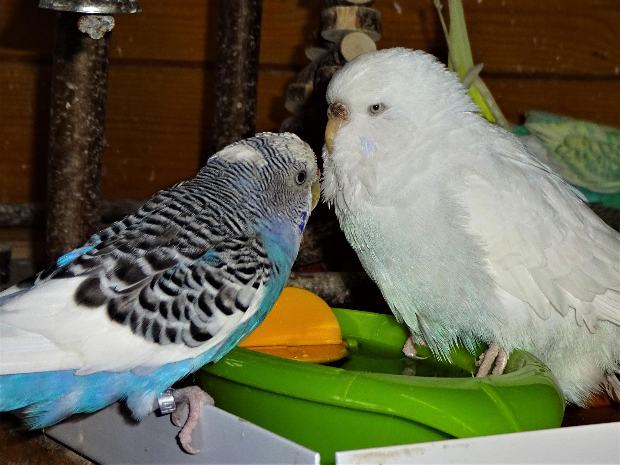 """Cleo: """"...och nö Joline, ich brauch doch jetzt mein Schönheitsbad!!! ..."""""""