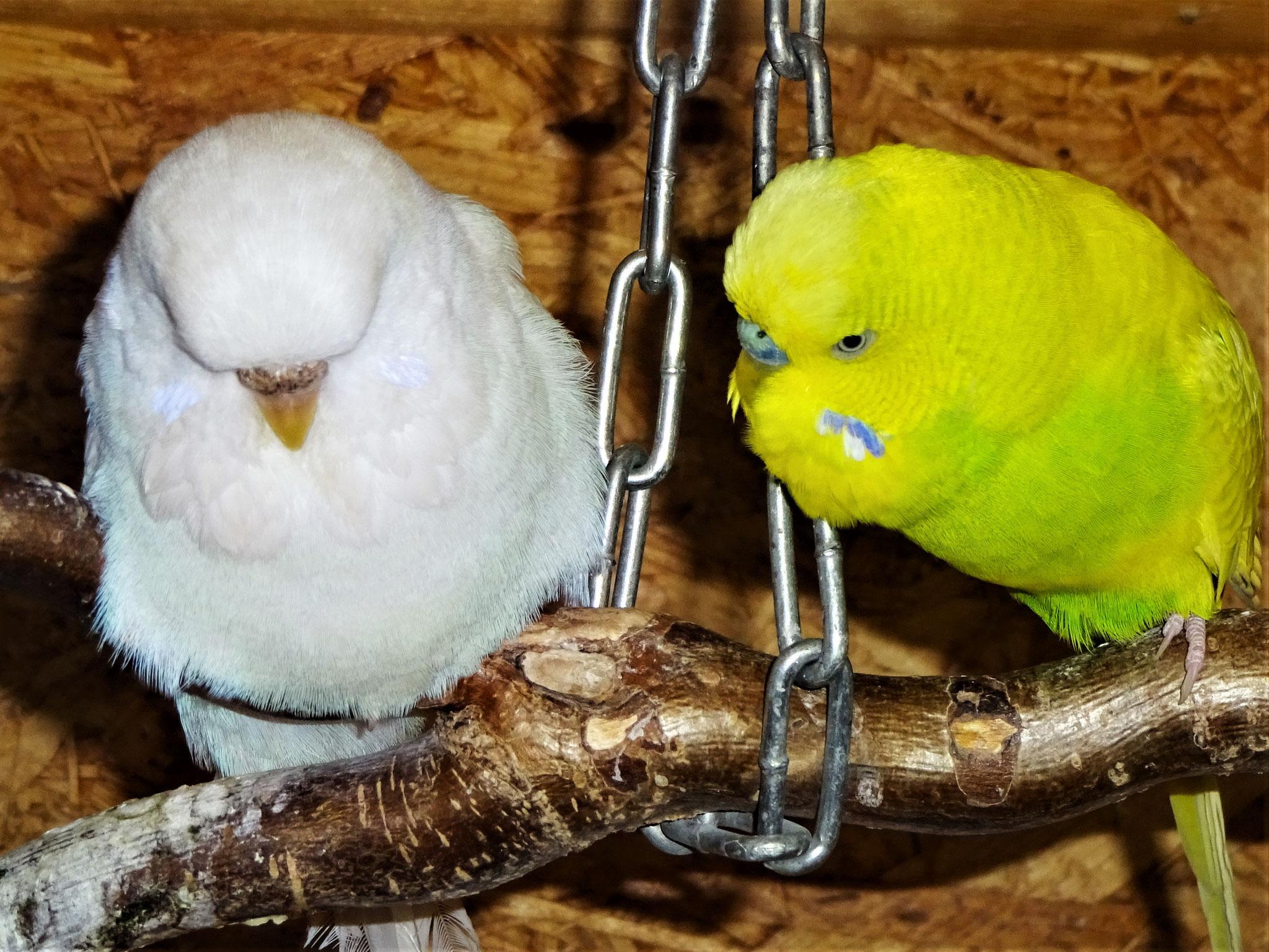 Cleo und Benny