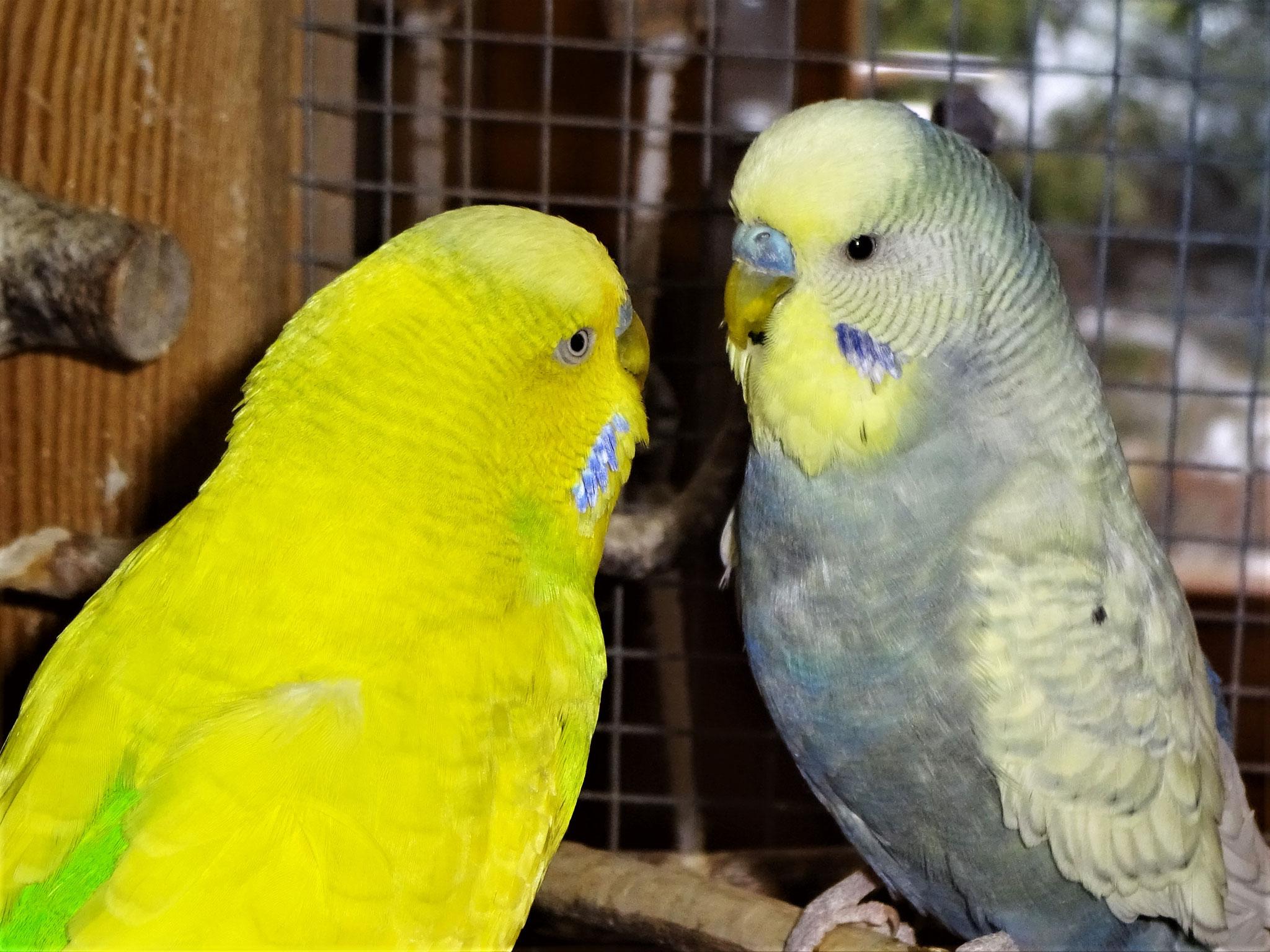 Benny und Leroy