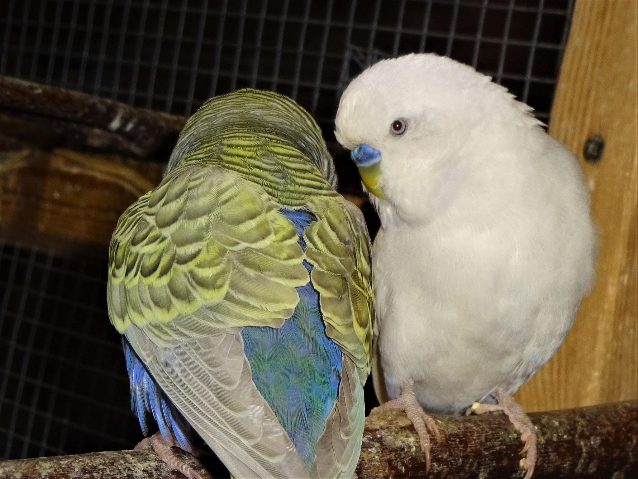 Tini und Vergil
