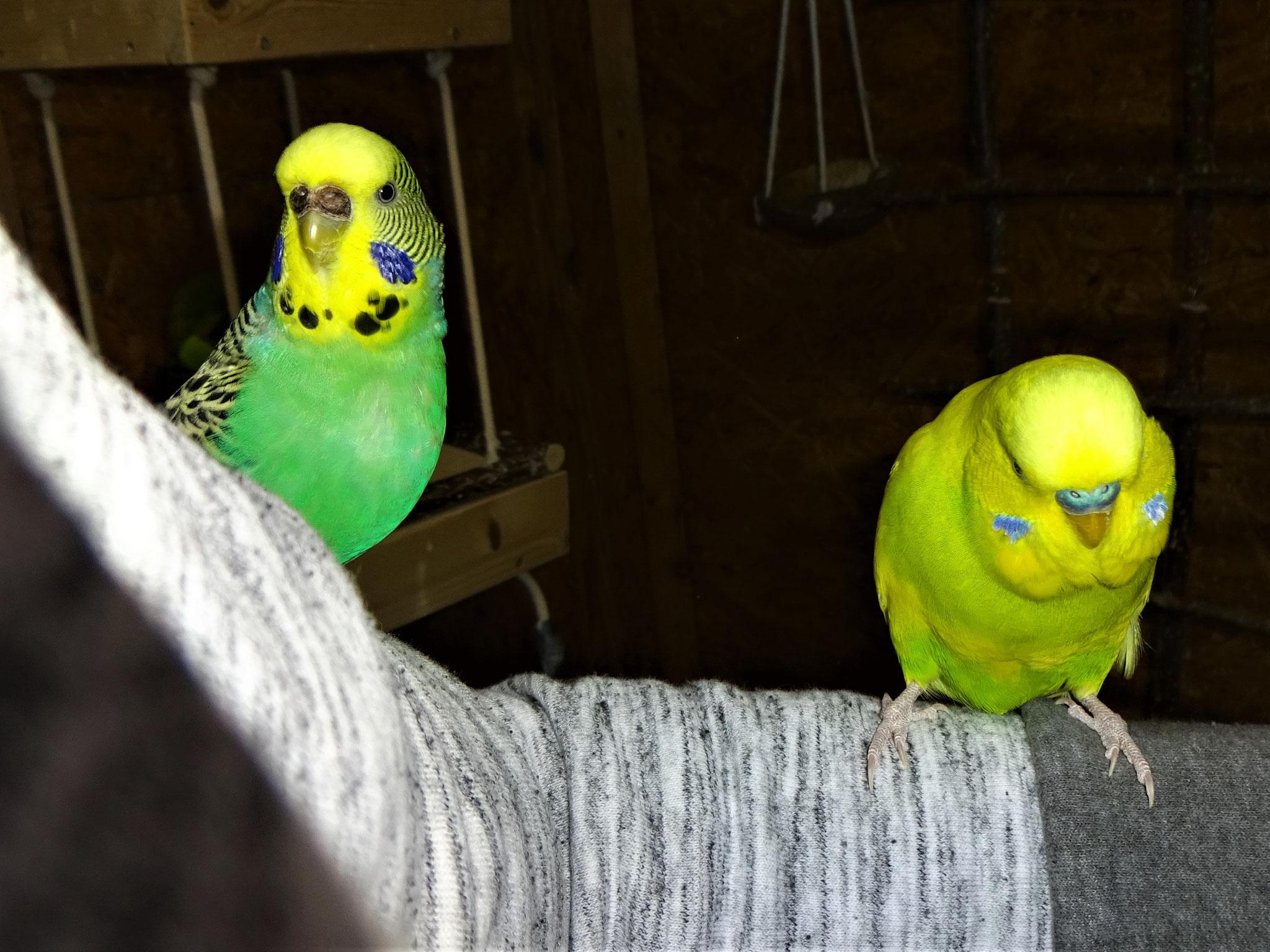 Lotte und Benny