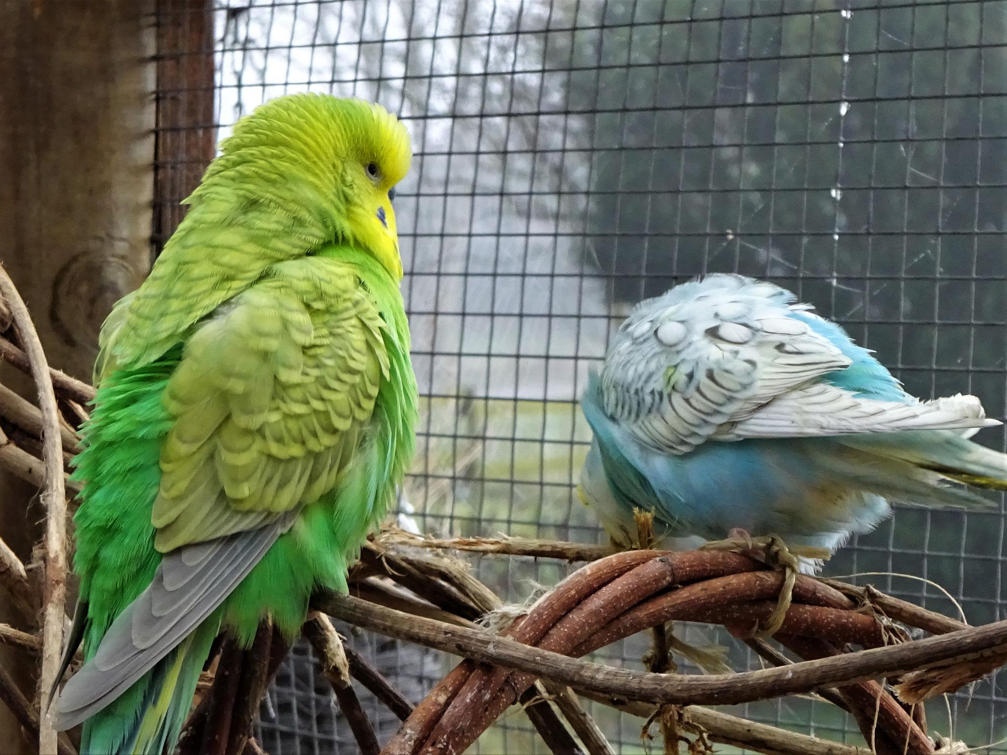 Filou und Anni