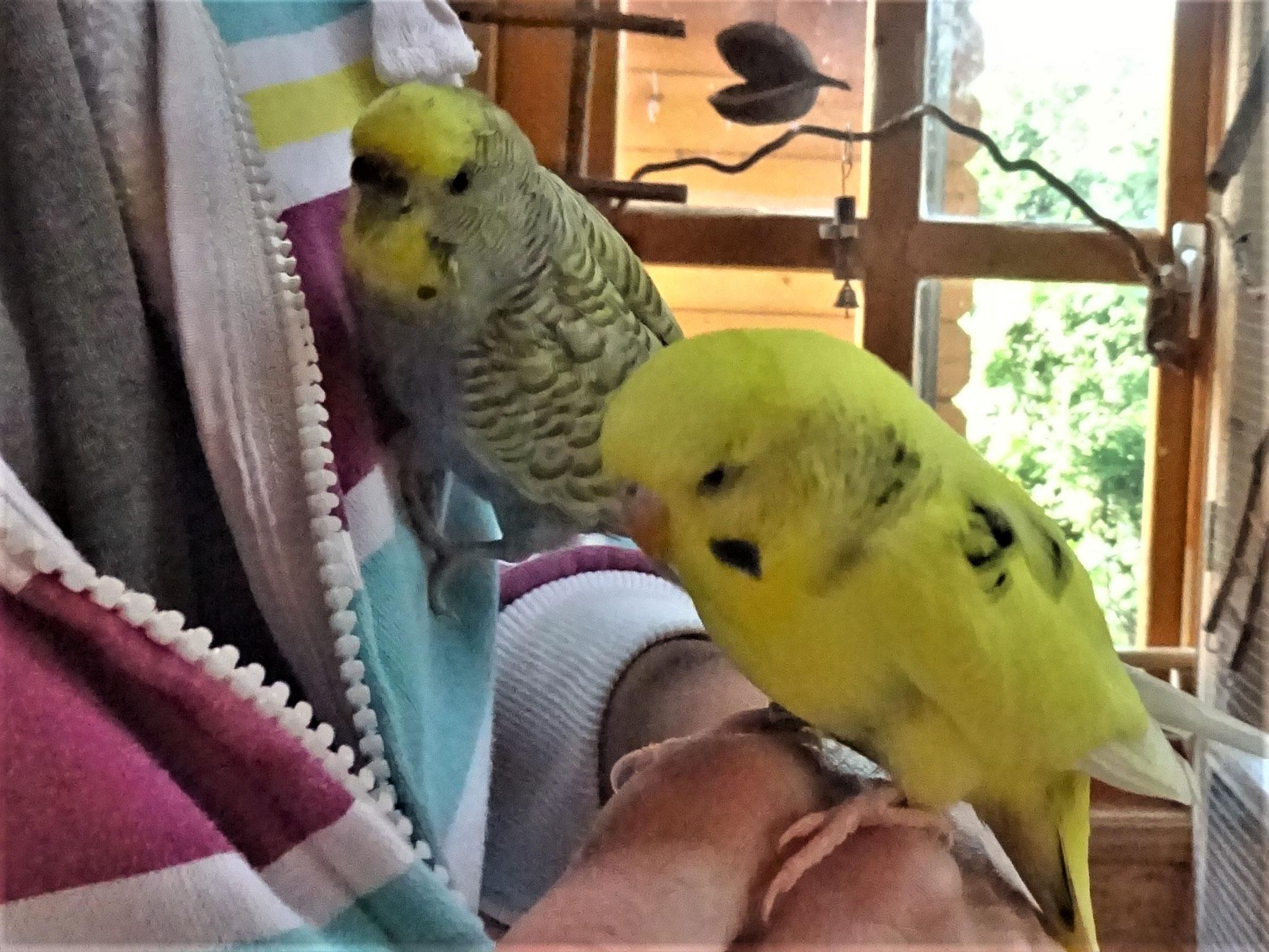 Tini und Tommy