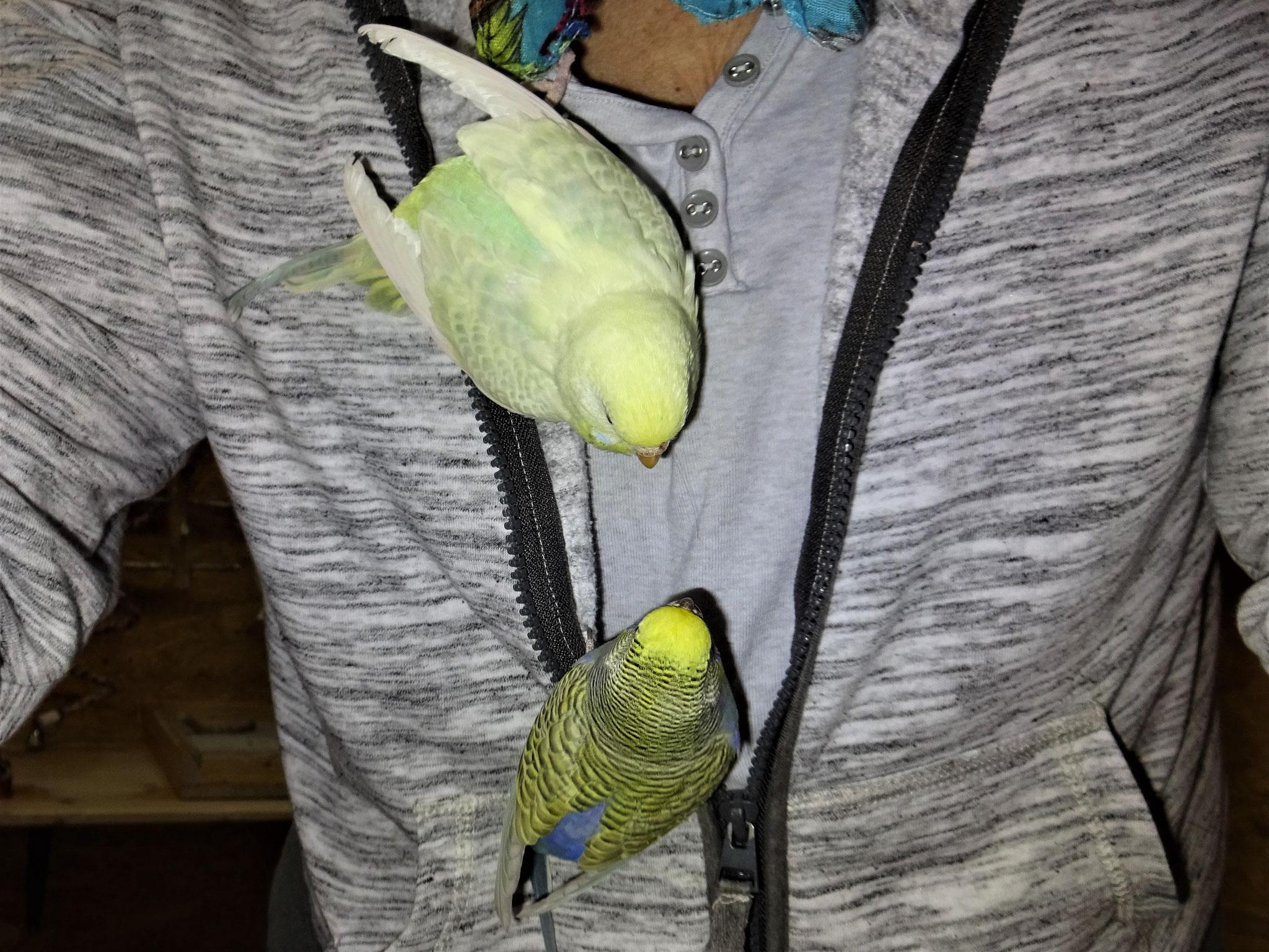 Flocke und Tini