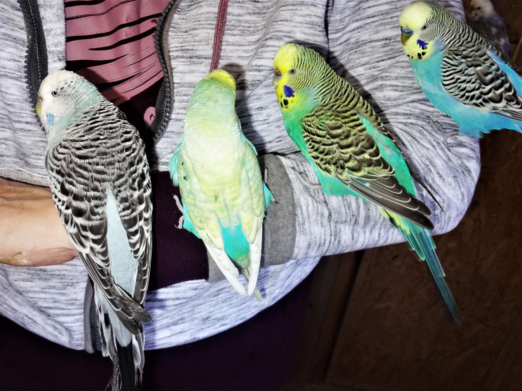 Queeny, Flo, Lotte und Jordy